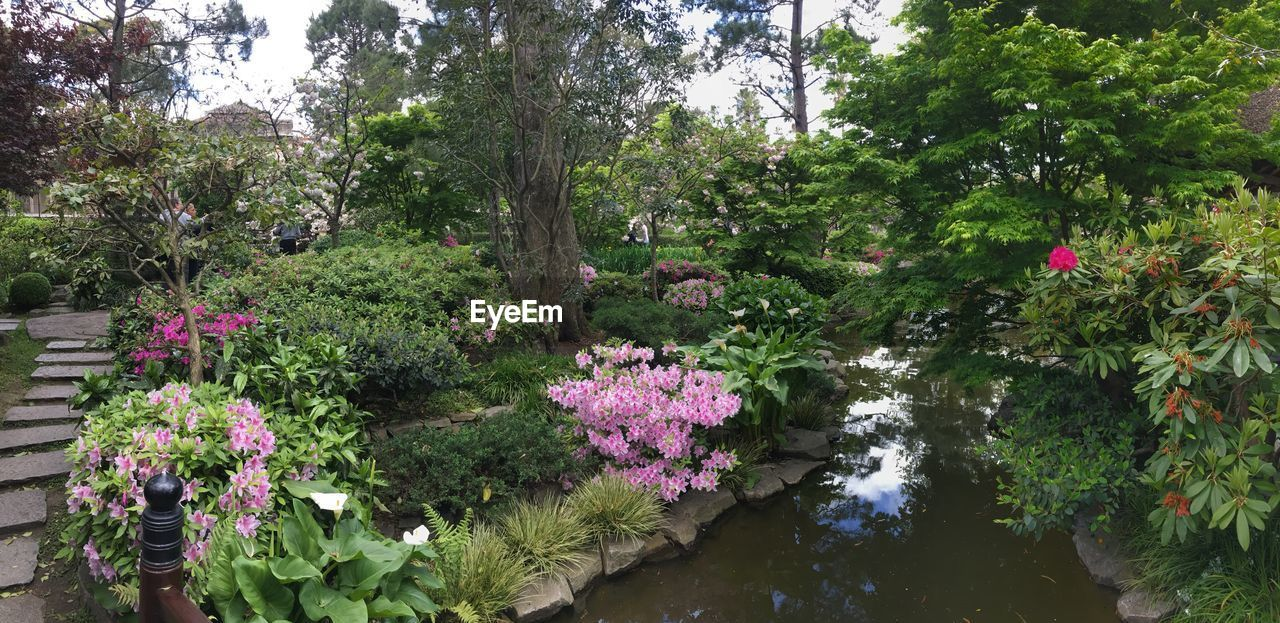 plant, flowering plant, flower, growth, beauty in nature, nature, tree, pink color, garden, plant part, leaf, choice, front or back yard, foliage, no people, park, outdoors, multi colored, botany, tranquility, spring, leaves, flowerbed