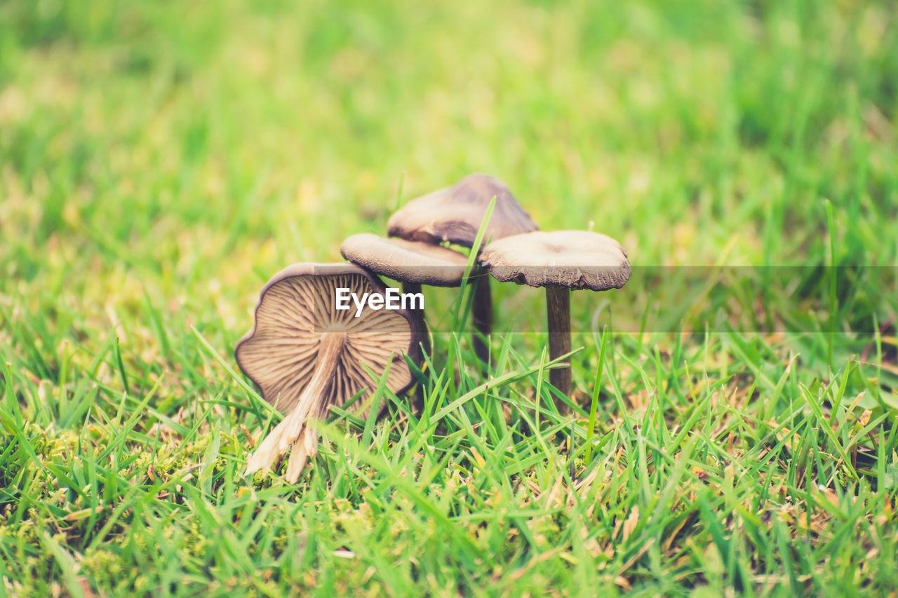 Close-Up Of Mushrooms Growing On Grassy Field