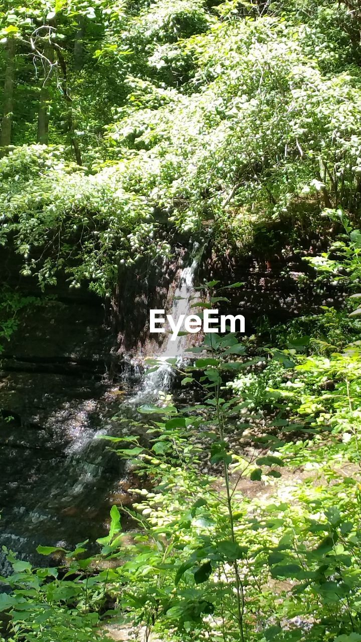 water, nature, waterfall, growth, motion, plant, forest, outdoors, beauty in nature, no people, day, tree, spraying, grass, freshness