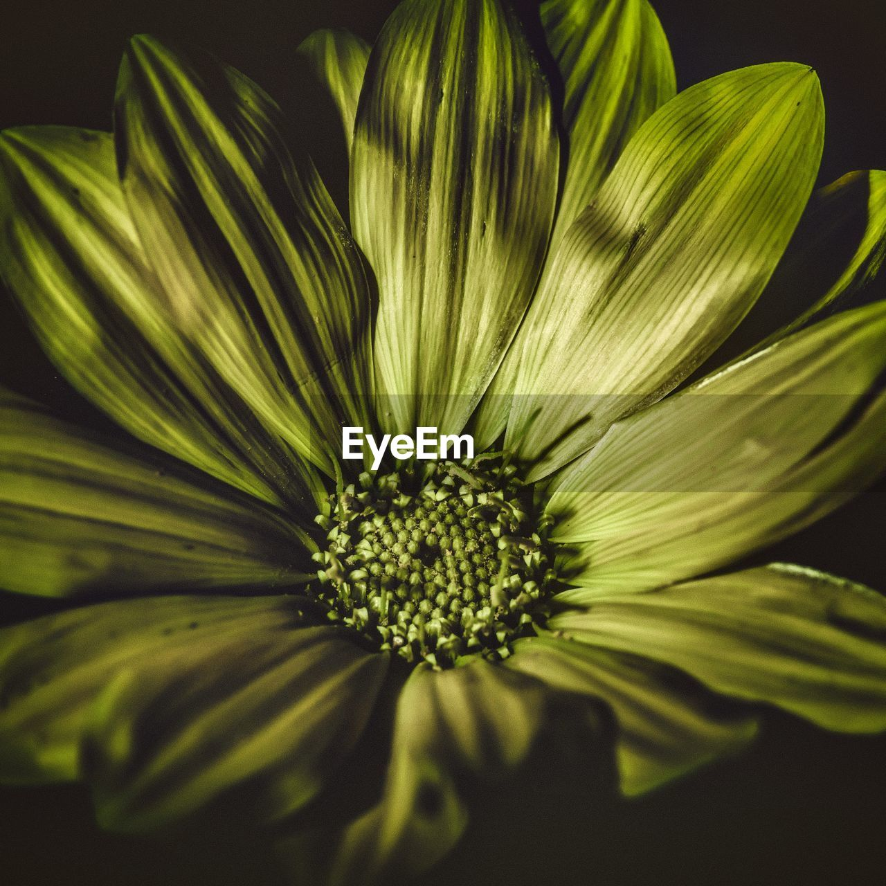 flower, petal, fragility, flower head, growth, freshness, no people, close-up, nature, plant, beauty in nature, day, outdoors