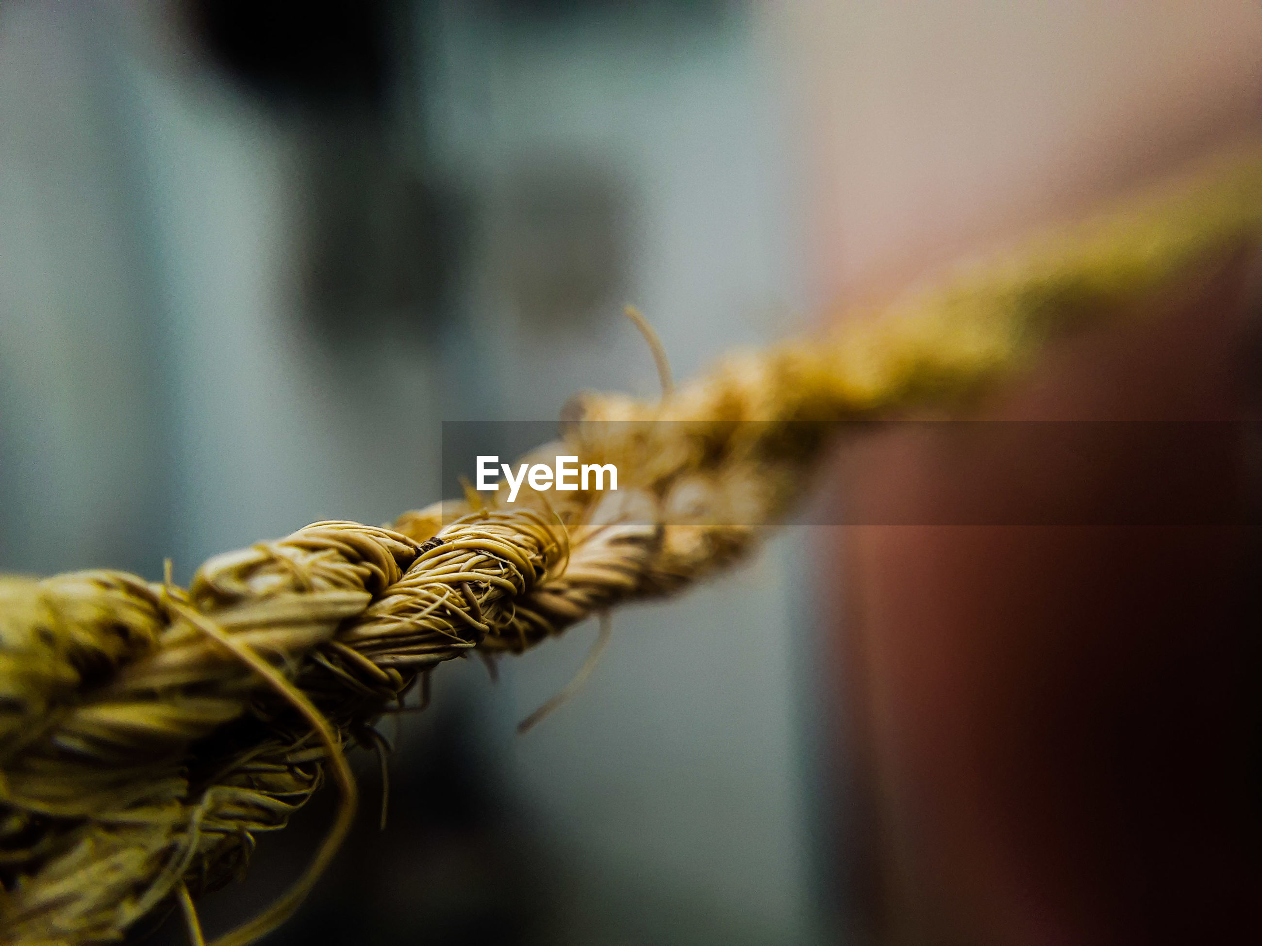 Close-up of twisted rope