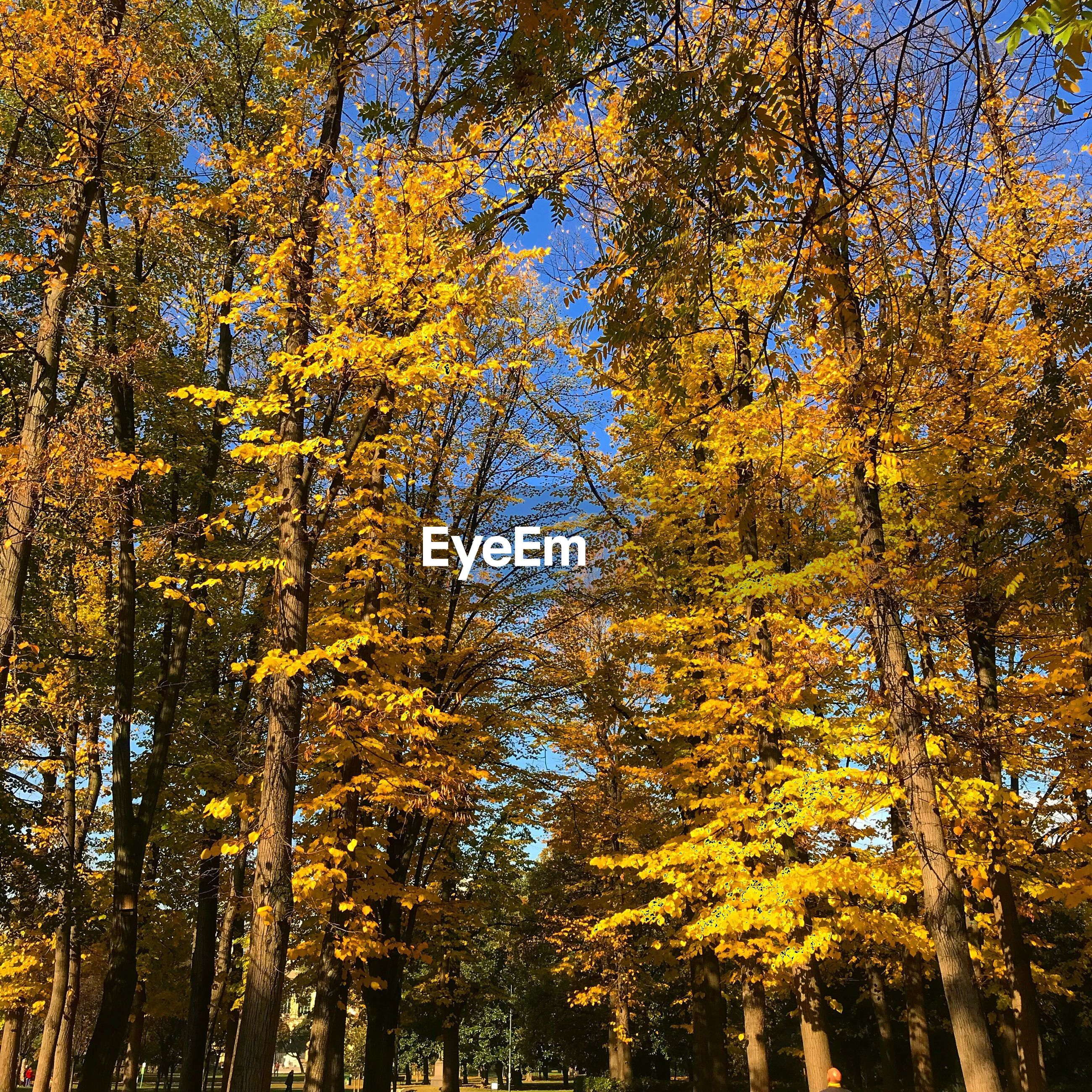 LOW ANGLE VIEW OF TREE IN AUTUMN FOREST