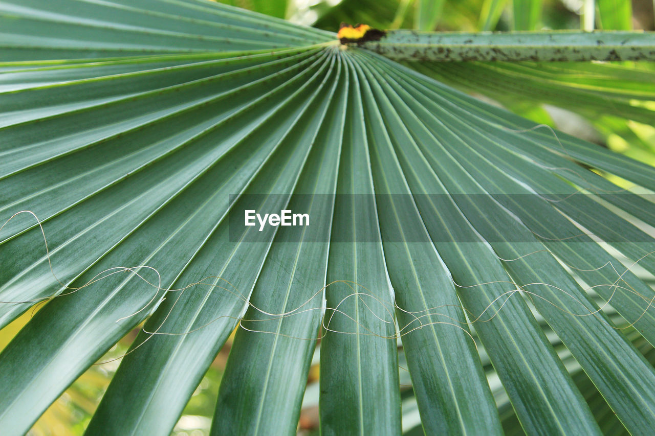 green color, leaf, plant part, growth, plant, close-up, palm tree, beauty in nature, no people, nature, day, palm leaf, tropical climate, pattern, freshness, tree, outdoors, focus on foreground, natural pattern, backgrounds, leaves, bamboo - plant