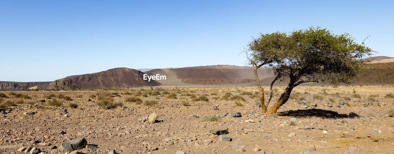 sky, environment, landscape, scenics - nature, land, plant, nature, clear sky, tranquil scene, tree, tranquility, desert, beauty in nature, non-urban scene, remote, sunlight, arid climate, climate, day, rock, no people, outdoors