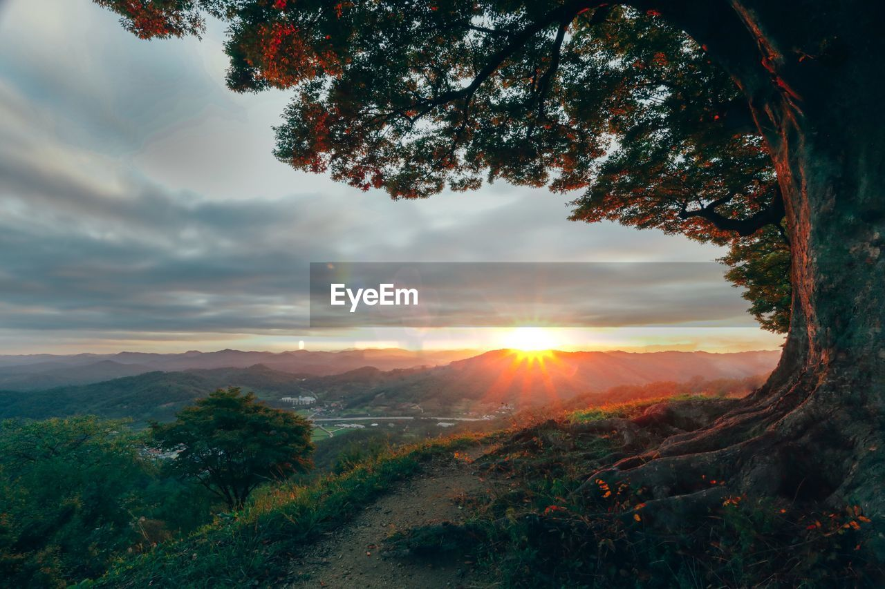 sky, sunset, beauty in nature, tree, cloud - sky, tranquility, plant, tranquil scene, scenics - nature, nature, landscape, environment, sun, orange color, non-urban scene, no people, land, outdoors, sunlight, growth, lens flare