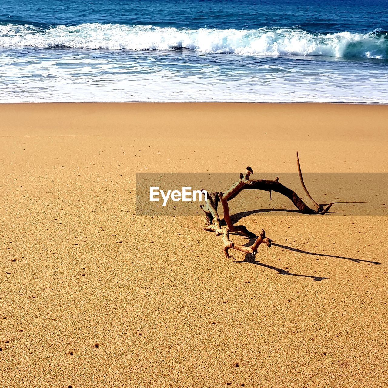 beach, land, sea, sand, water, wave, beauty in nature, nature, motion, tranquility, scenics - nature, tranquil scene, day, no people, outdoors, horizon over water, sunlight, idyllic, horizon, driftwood