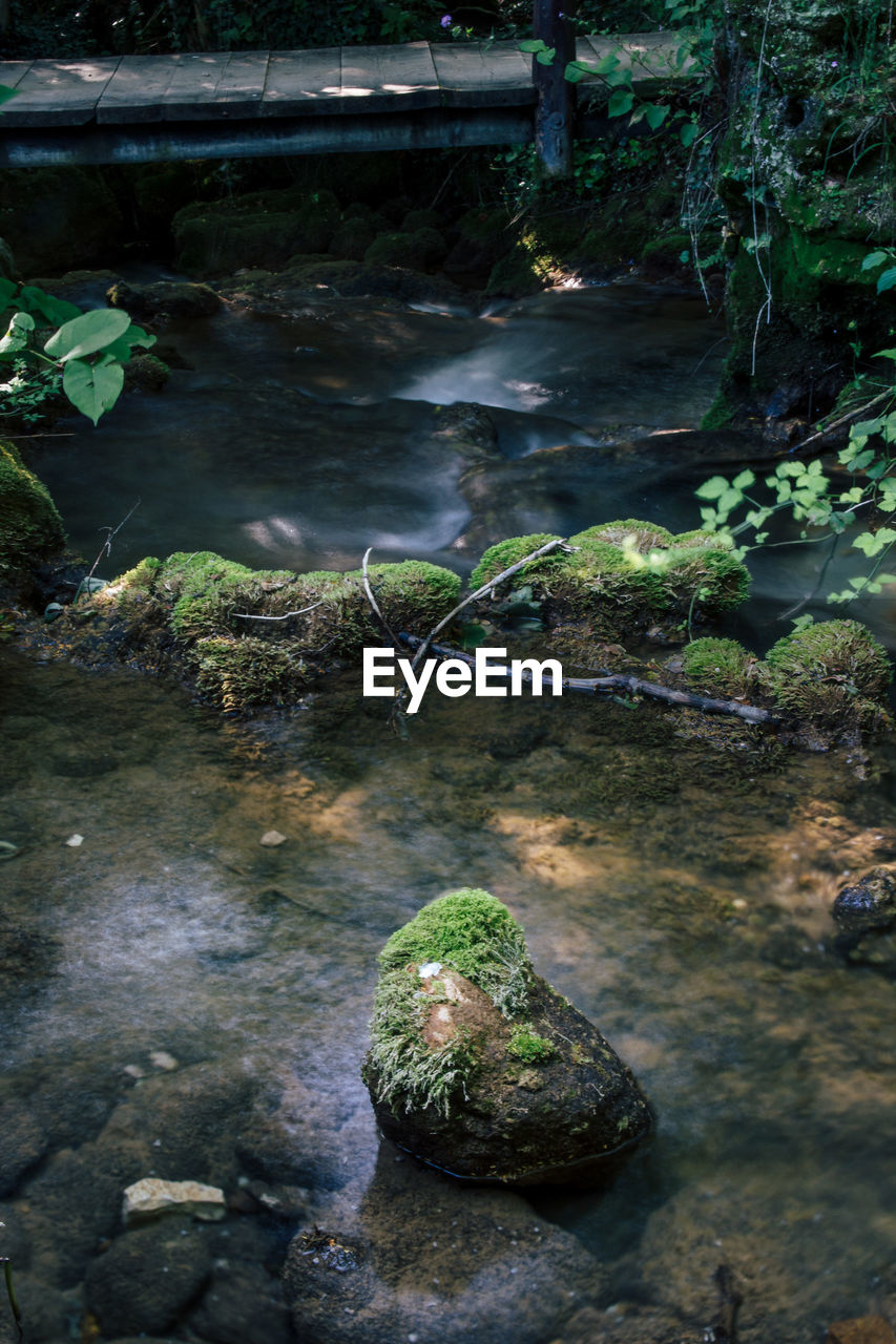 rock, water, rock - object, solid, nature, plant, no people, day, tranquility, moss, tree, land, beauty in nature, growth, forest, outdoors, lake, green color, stream - flowing water, flowing water, shallow