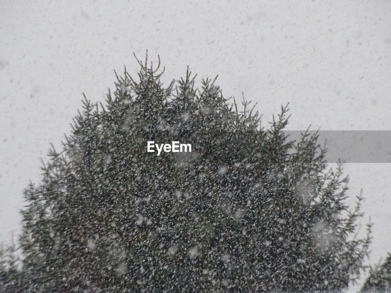 snow, winter, cold temperature, nature, no people, outdoors, day, close-up, frozen, snowing, beauty in nature, tree, animal themes, growth, sky, snowflake