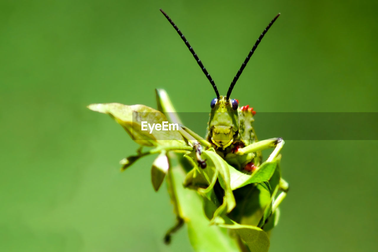 green color, insect, invertebrate, close-up, one animal, plant, animal themes, selective focus, no people, animals in the wild, animal wildlife, animal, nature, beauty in nature, plant part, leaf, growth, day, focus on foreground, flower, outdoors, sepal, butterfly - insect