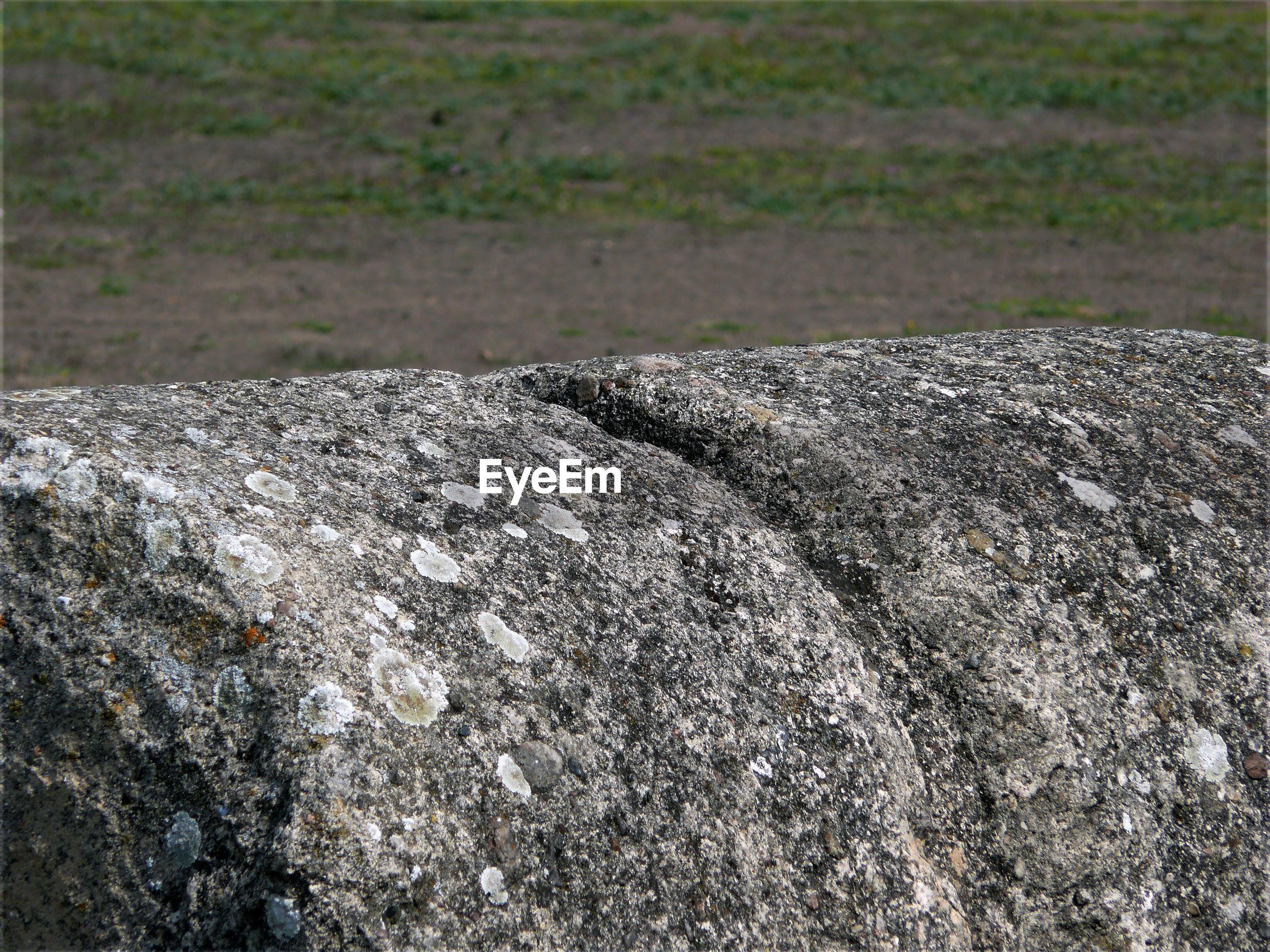 Close-up of rock on landscape