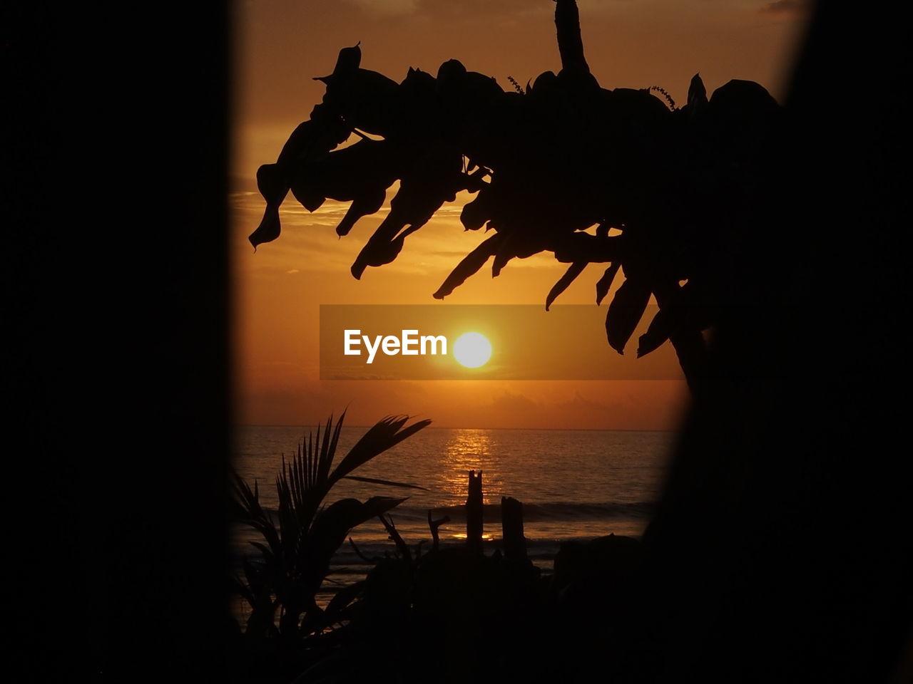sunset, sky, silhouette, water, beauty in nature, scenics - nature, sea, orange color, horizon over water, sun, tranquil scene, tranquility, horizon, nature, plant, no people, tree, idyllic, beach, outdoors