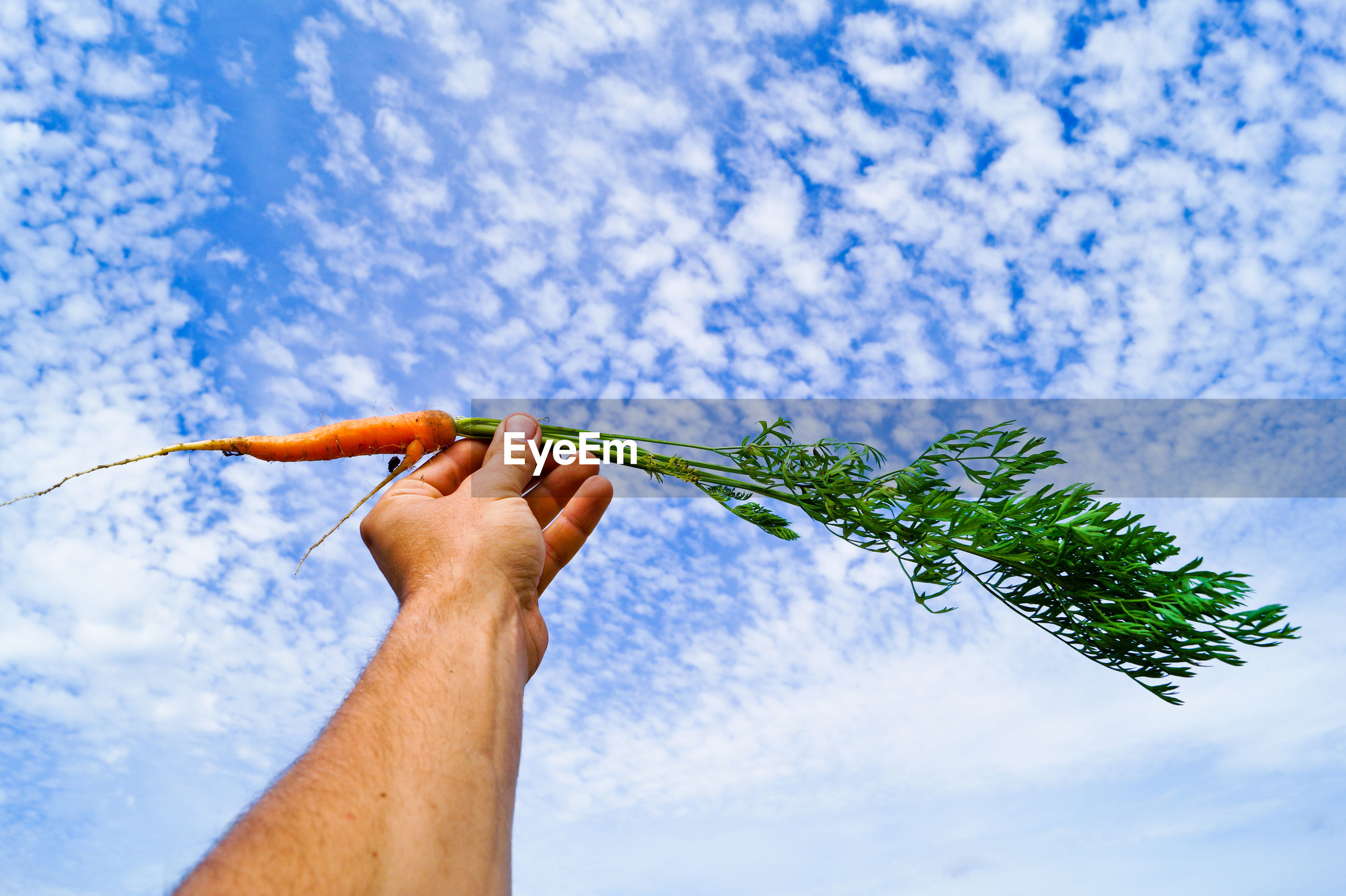 Low angle view of hand holding carrot against cloudy sky