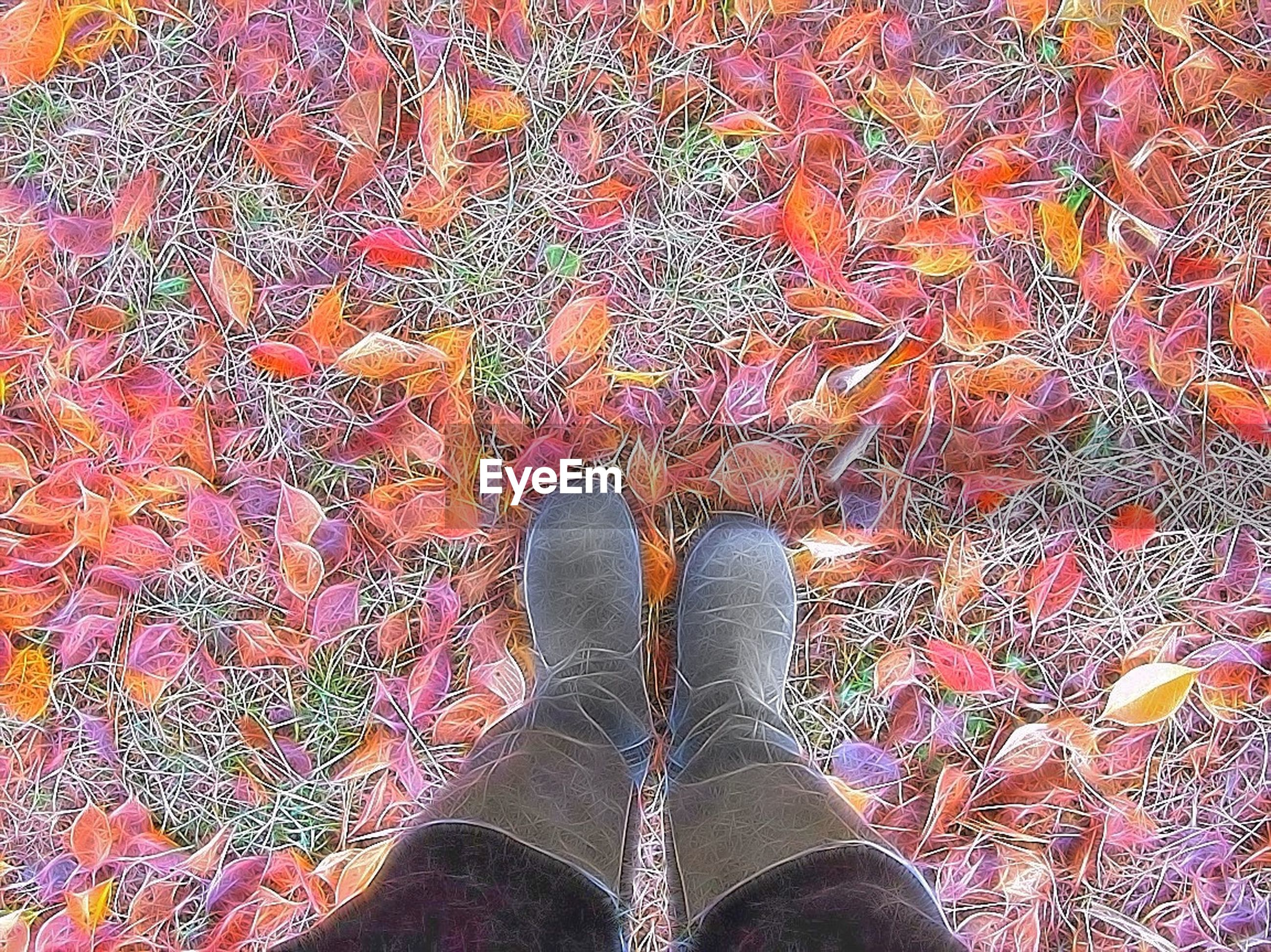 low section, person, personal perspective, high angle view, shoe, human foot, standing, autumn, lifestyles, unrecognizable person, change, part of, leaf, footwear, leisure activity, outdoors