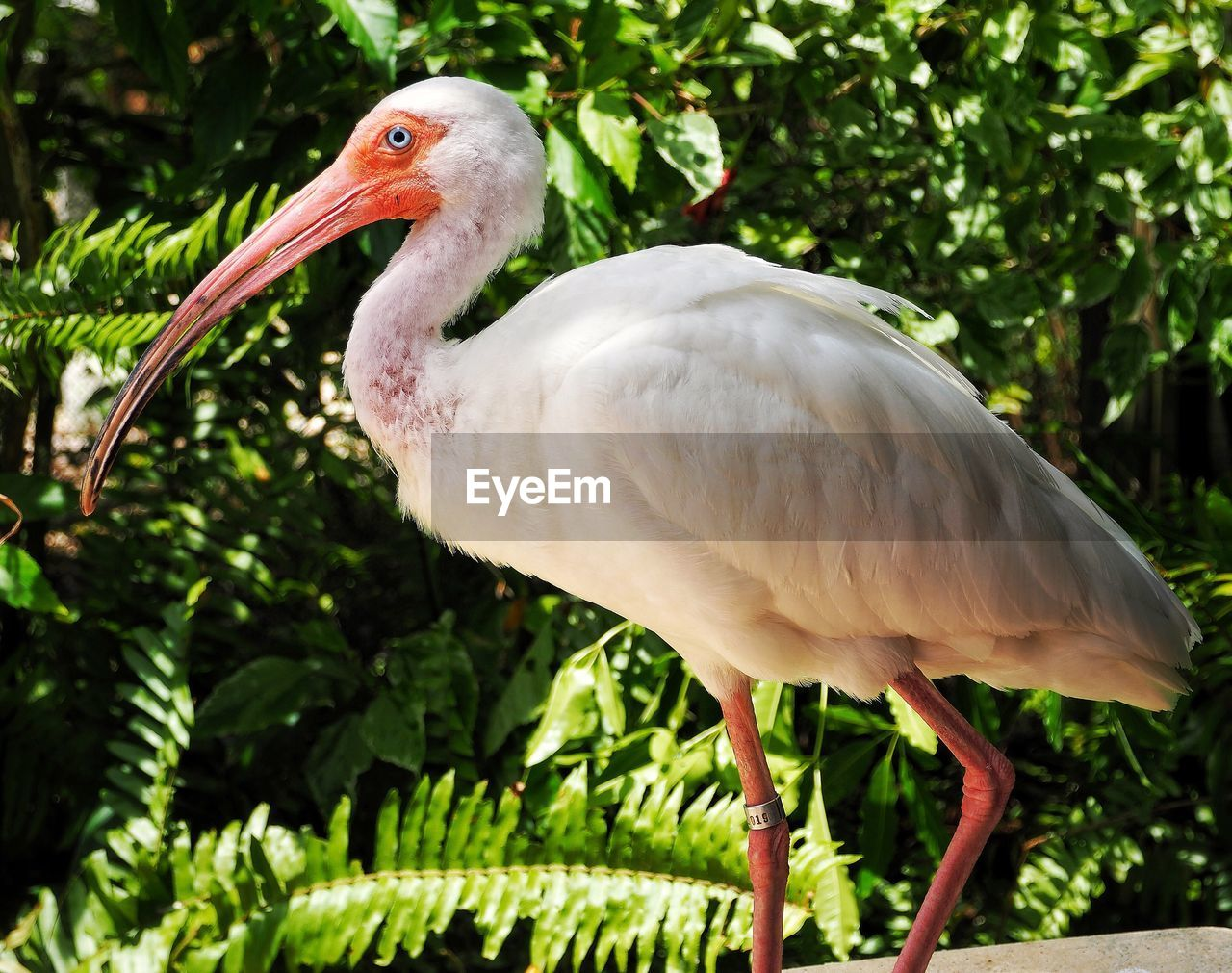 bird, animal themes, animal, vertebrate, animal wildlife, animals in the wild, one animal, focus on foreground, beak, plant, no people, nature, tree, day, perching, close-up, white color, outdoors, ibis, beauty in nature, stork, animal neck