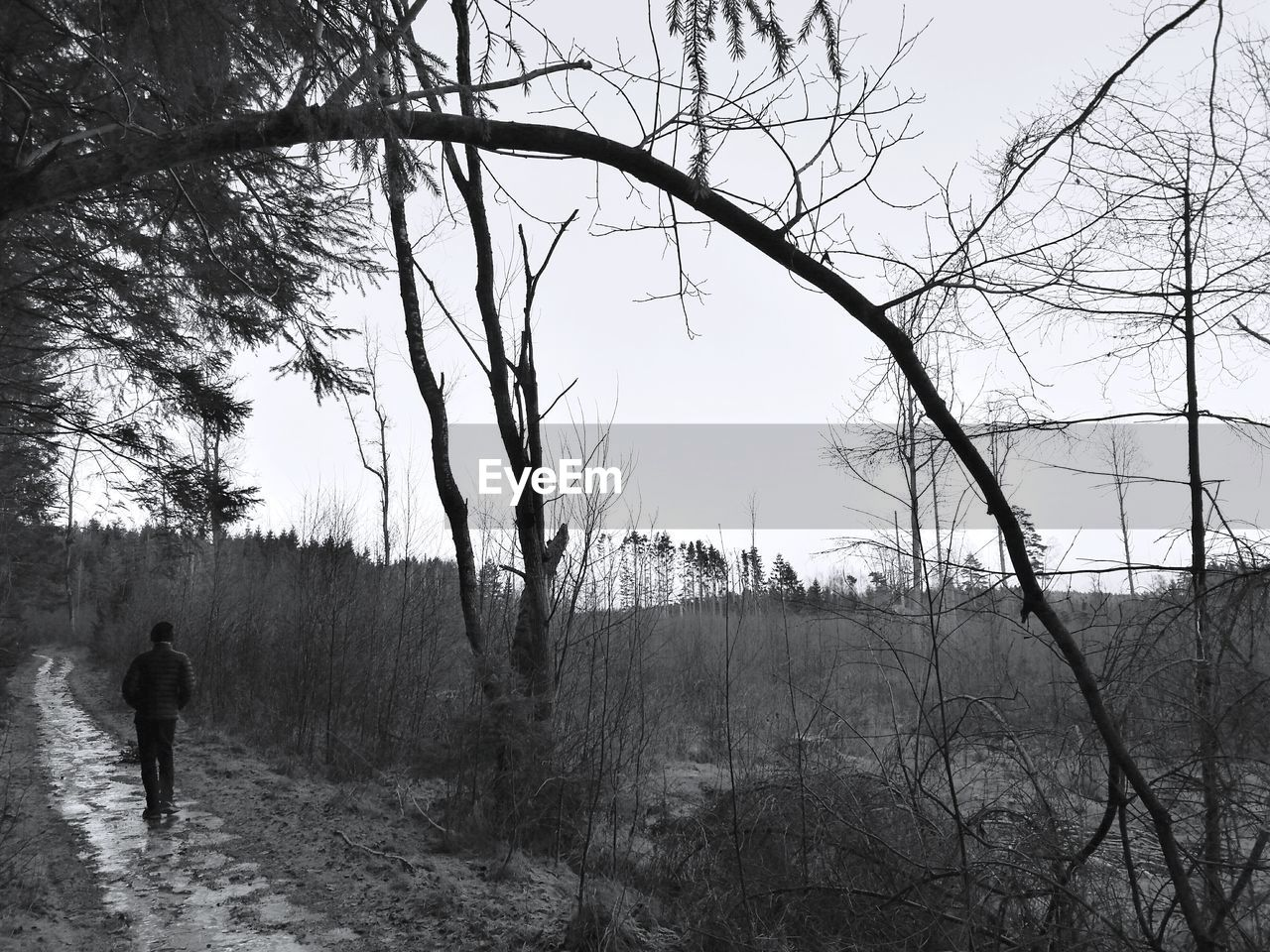 Rear View Of Man Walking By Bare Trees During Winter