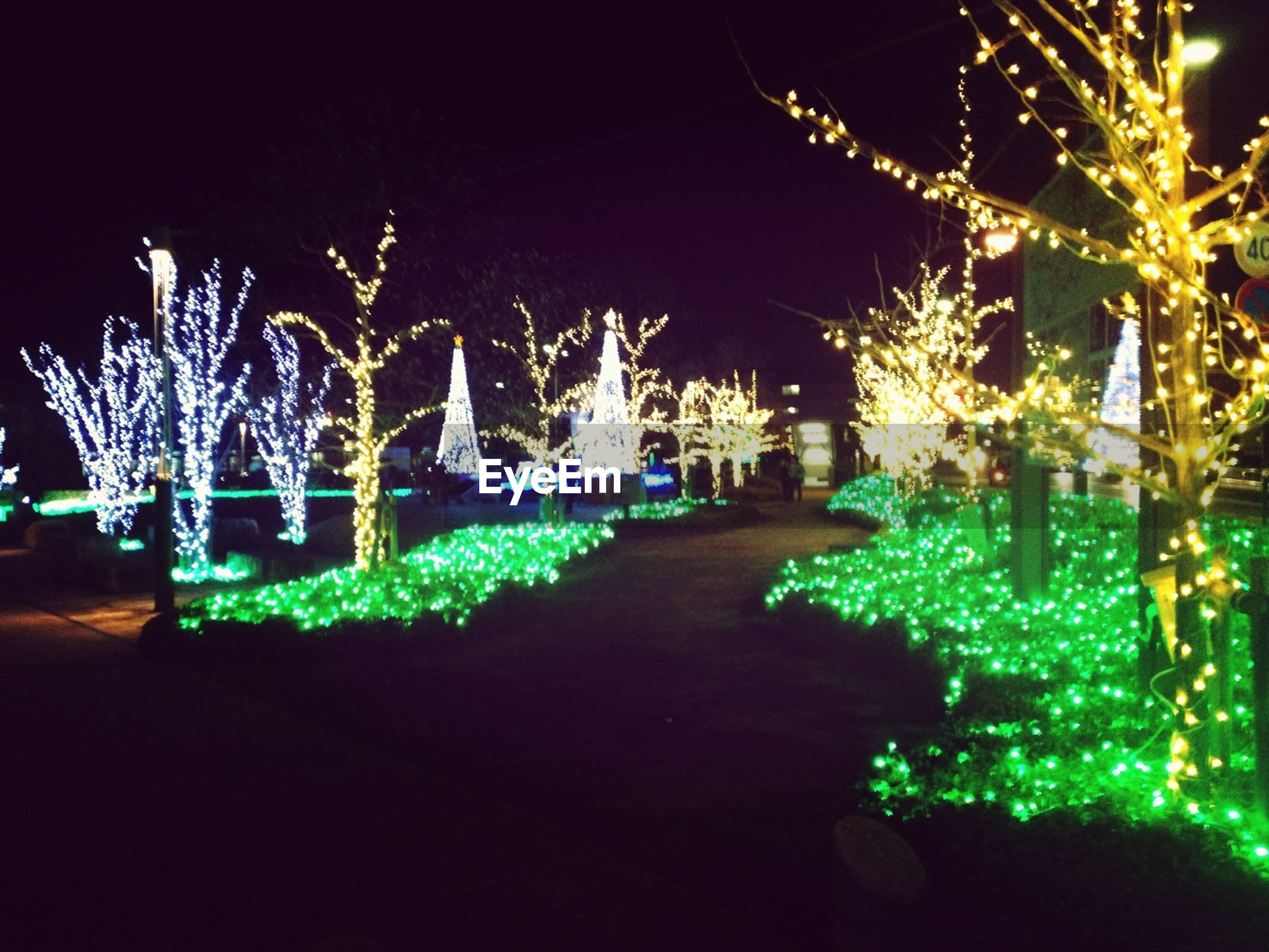 night, illuminated, lighting equipment, tree, light - natural phenomenon, outdoors, decoration, long exposure, glowing, park - man made space, celebration, dark, built structure, building exterior, green color, incidental people, arts culture and entertainment, plant, growth, motion