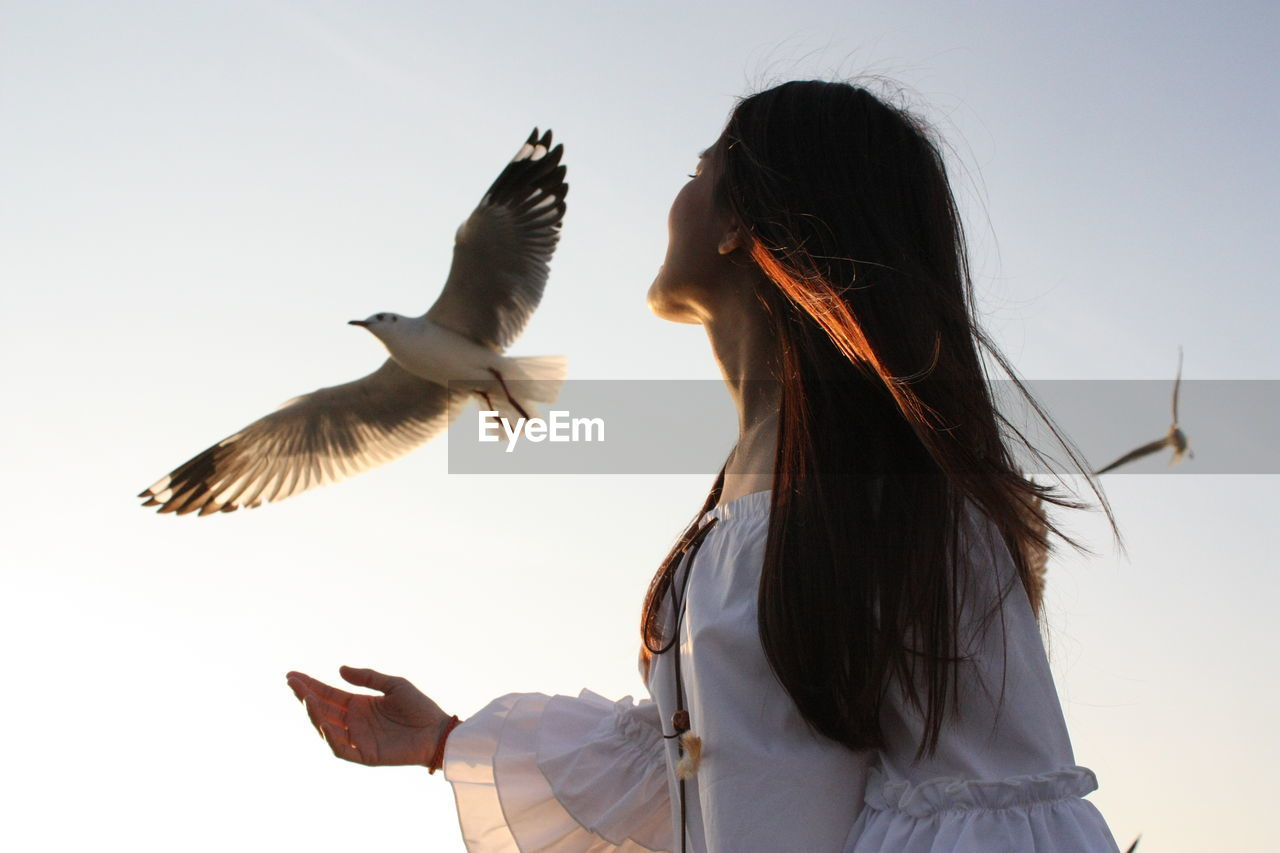 flying, animal themes, bird, one animal, animals in the wild, spread wings, clear sky, rear view, real people, one person, motion, nature, animal wildlife, low angle view, outdoors, seagull, day, sky, young women, young adult, people