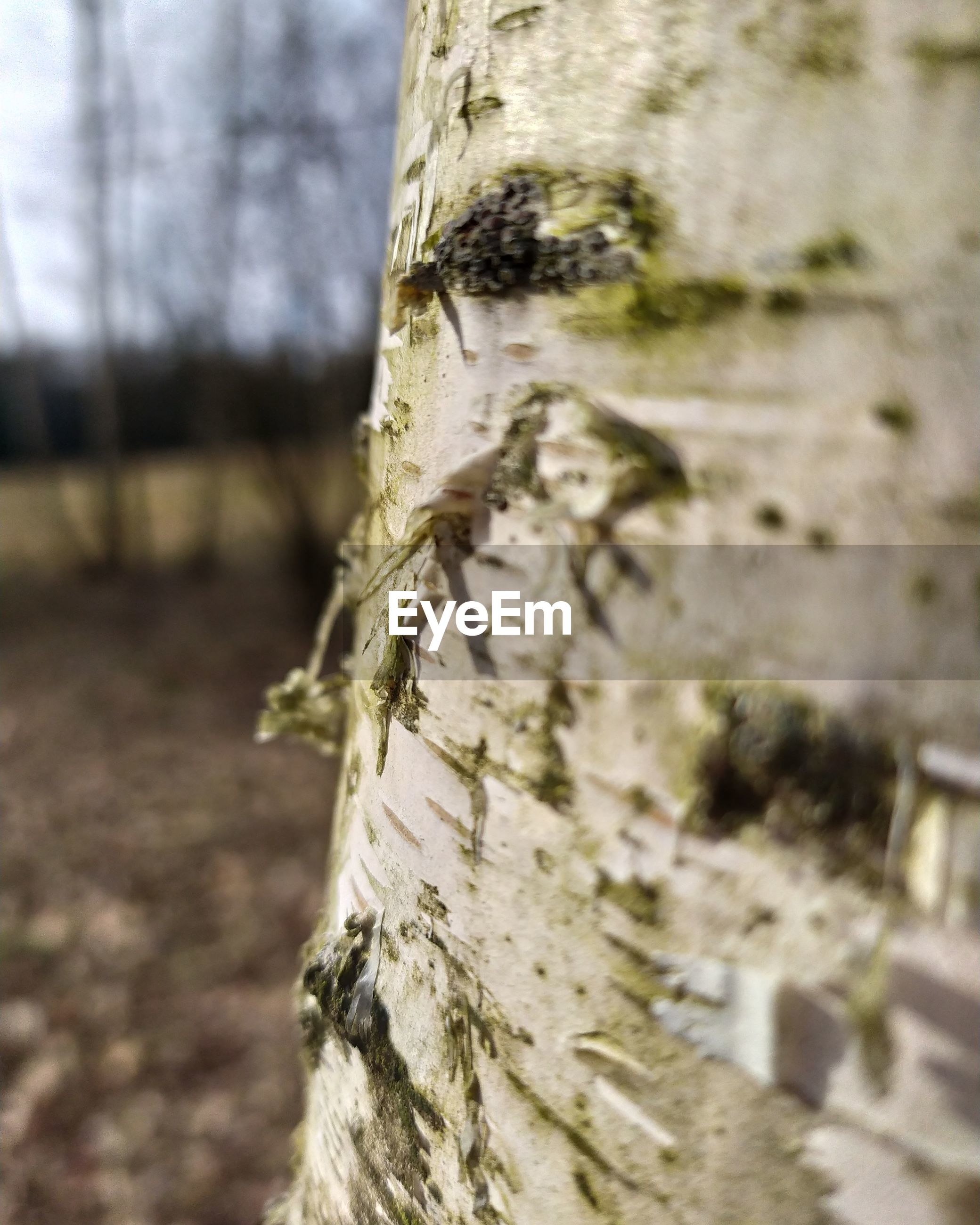 CLOSE-UP OF PLANT GROWING ON TREE TRUNK IN FOREST