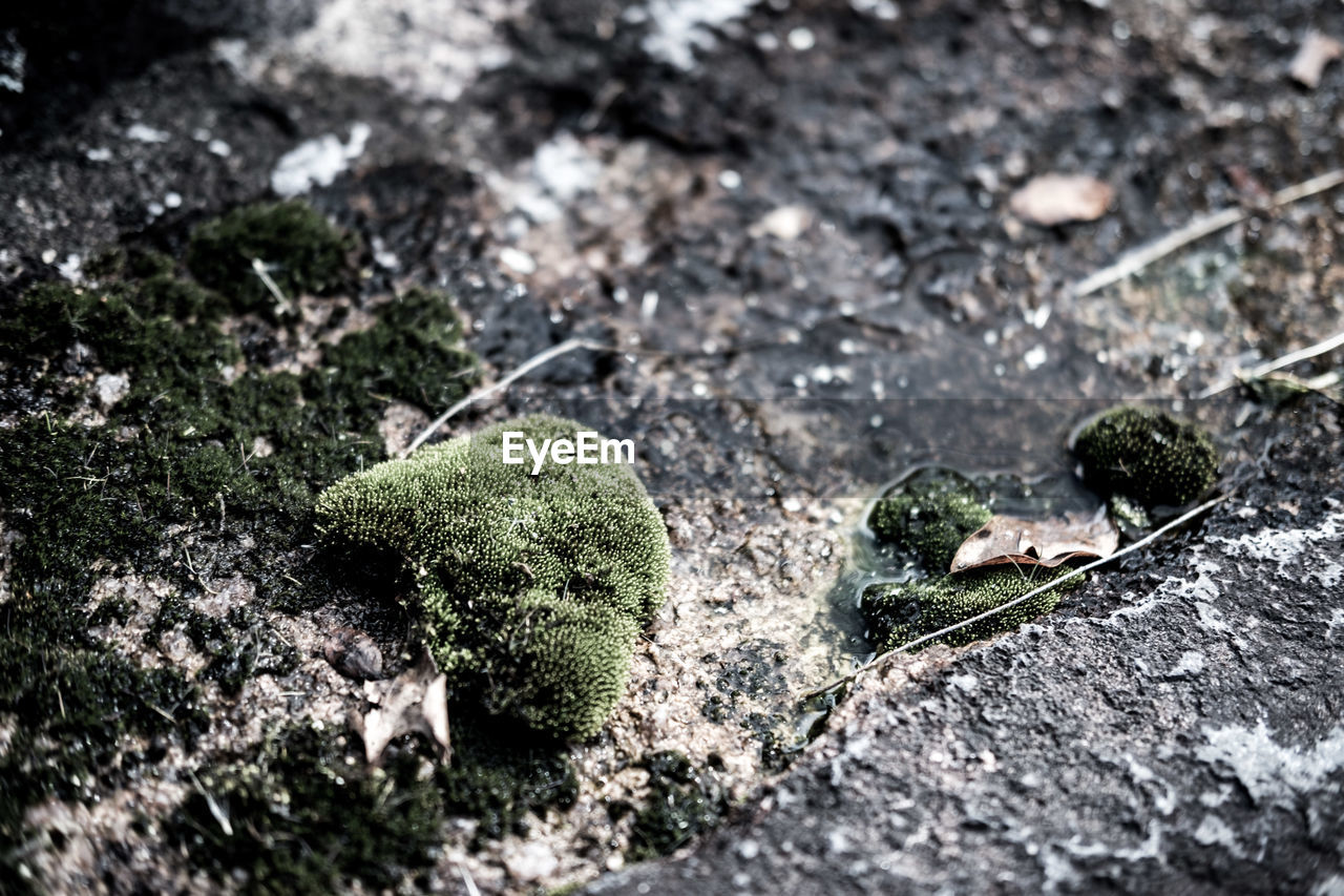 close-up, selective focus, no people, moss, day, nature, outdoors, animal themes, growth, fragility, freshness
