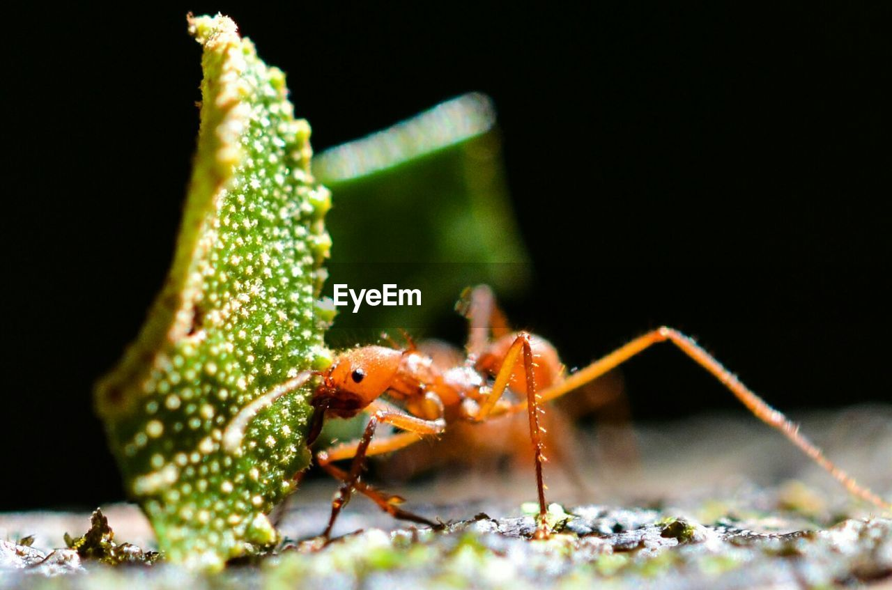 animal themes, animals in the wild, one animal, animal wildlife, close-up, no people, insect, green color, leaf, nature, day, outdoors