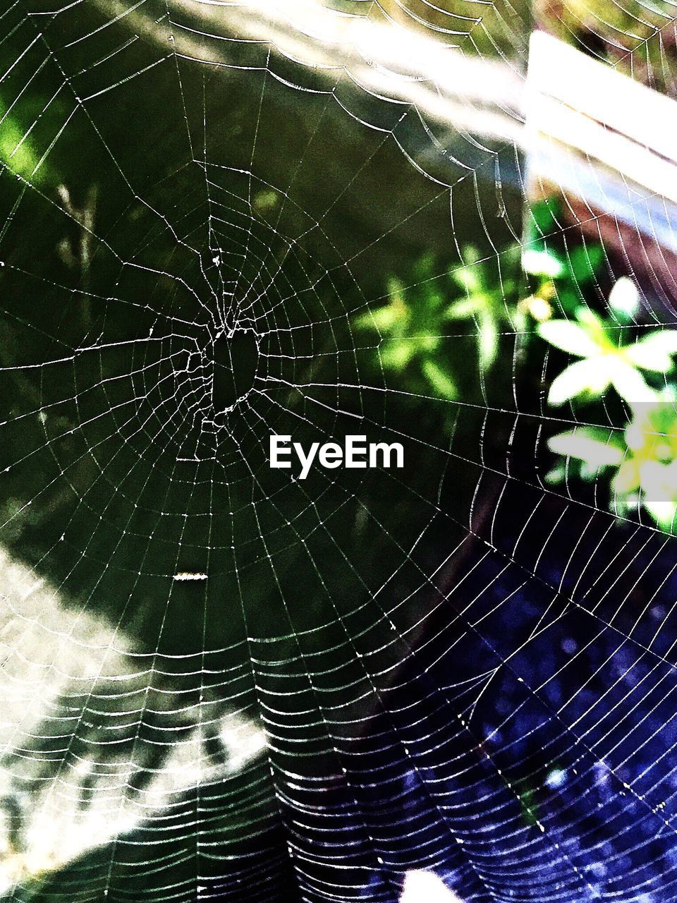 spider web, spider, web, one animal, nature, close-up, animal themes, focus on foreground, no people, animals in the wild, outdoors, fragility, survival, intricacy, day, beauty in nature