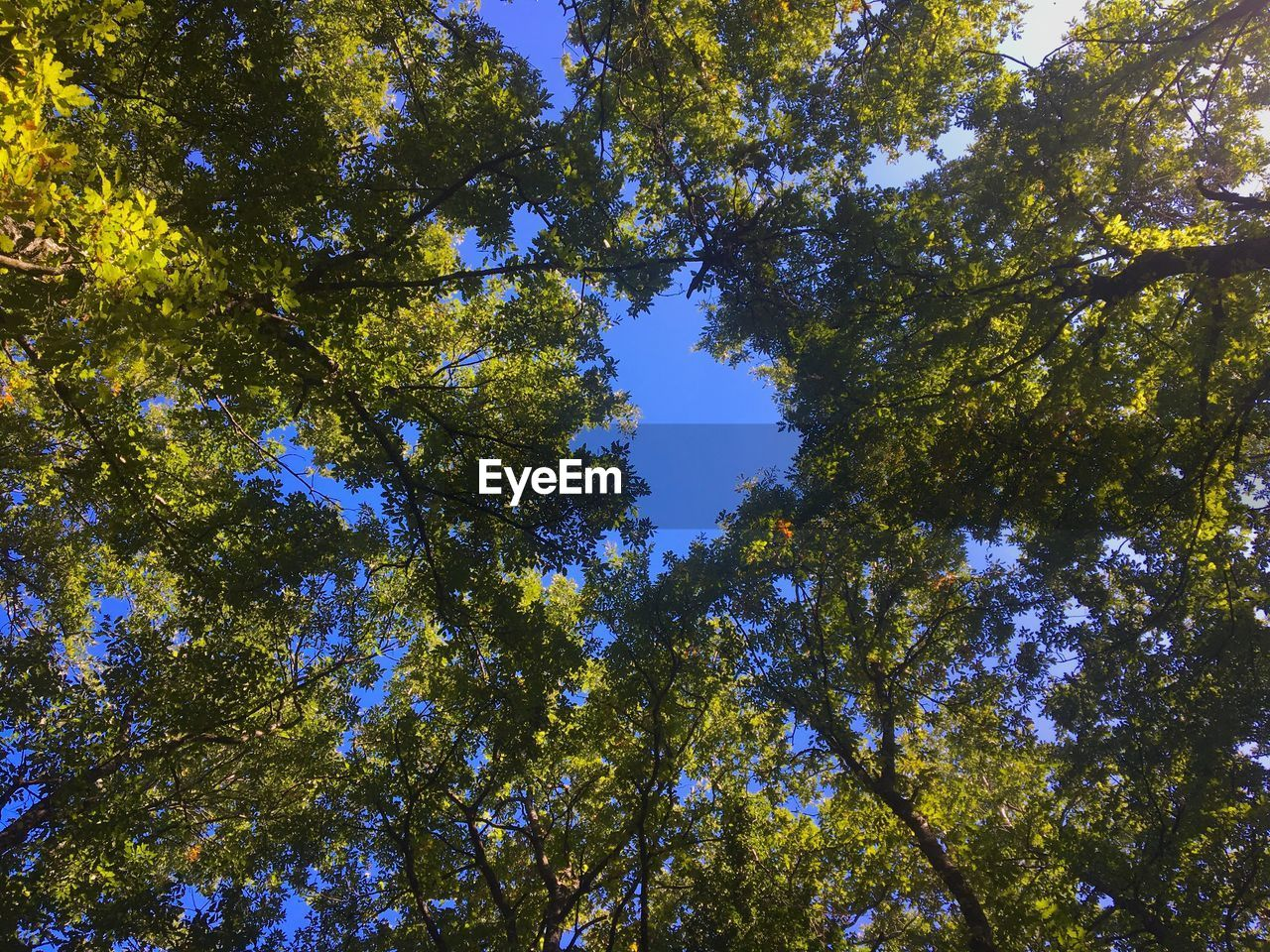 tree, plant, low angle view, growth, beauty in nature, nature, no people, tranquility, day, sky, sunlight, green color, outdoors, forest, full frame, branch, backgrounds, idyllic, tree canopy, sunny, directly below