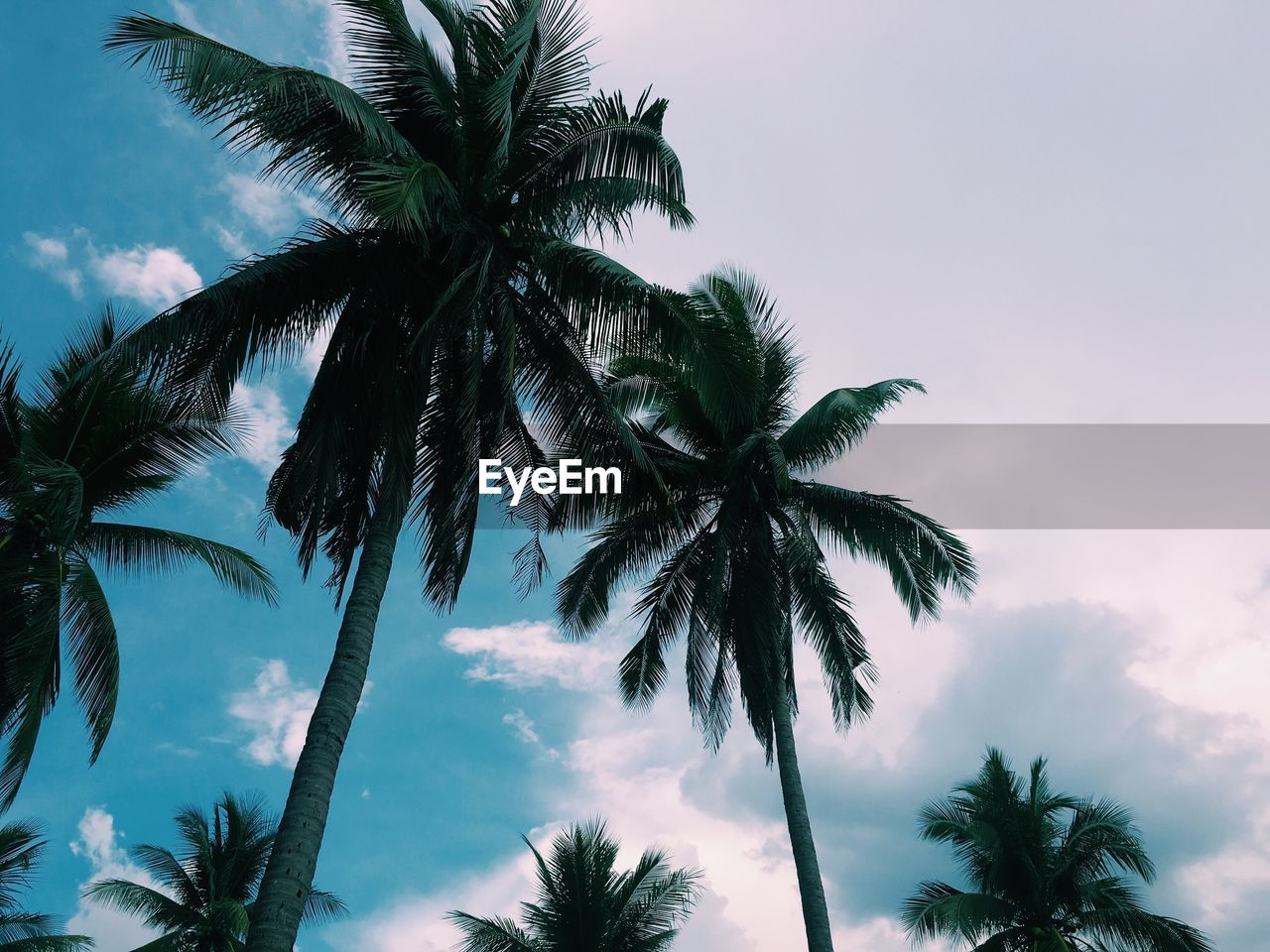 palm tree, tree, low angle view, sky, tree trunk, beauty in nature, nature, palm frond, scenics, tranquility, cloud - sky, no people, growth, outdoors, day, leaf