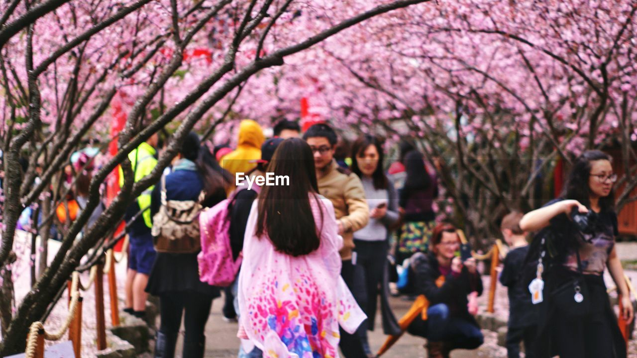 People Walking Amidst Trees At Auburn Botanic Gardens