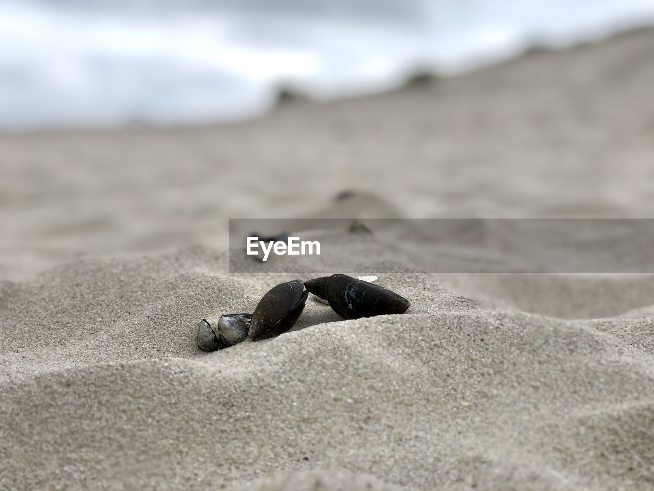 beach, sand, land, selective focus, nature, no people, animal, day, sea, animal wildlife, close-up, animal themes, one animal, animals in the wild, outdoors, surface level, focus on foreground, solid, rock, sea life, marine