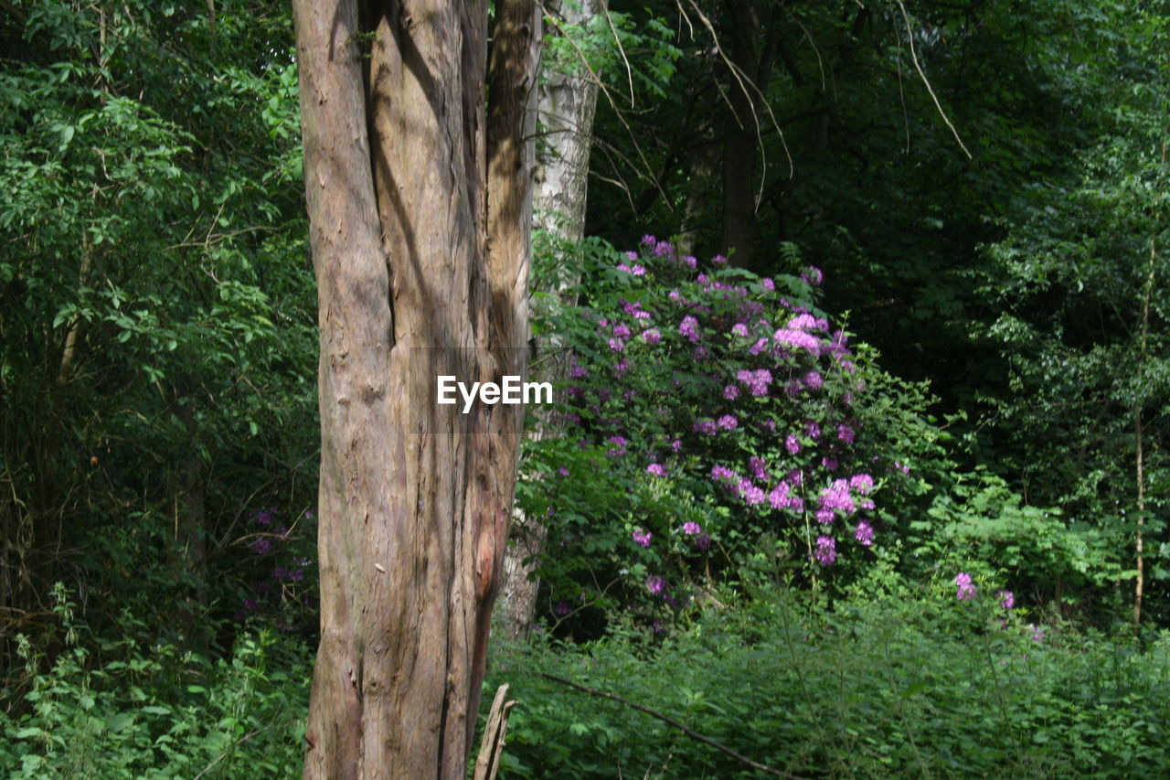 tree, nature, flower, growth, day, no people, plant, outdoors