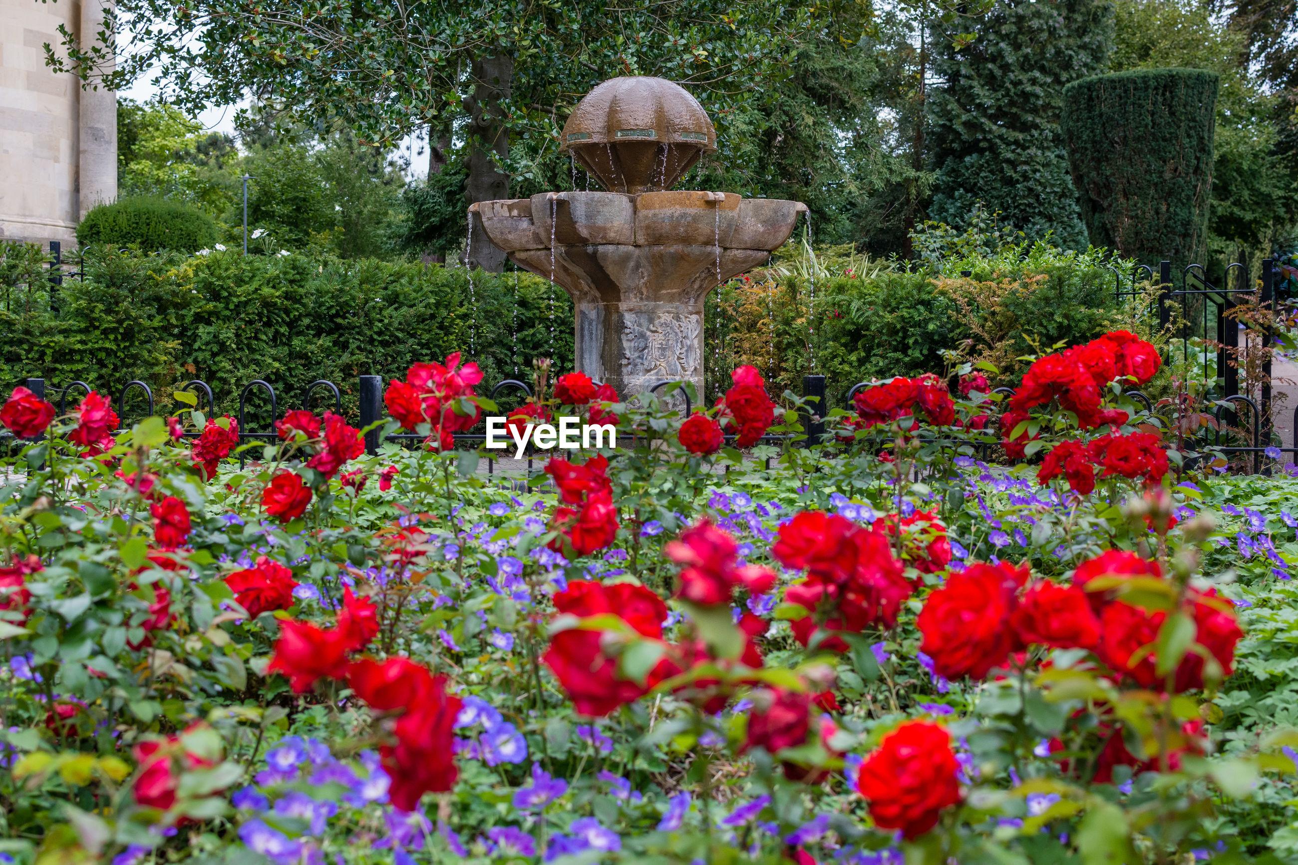 RED FLOWERING PLANTS IN GARDEN