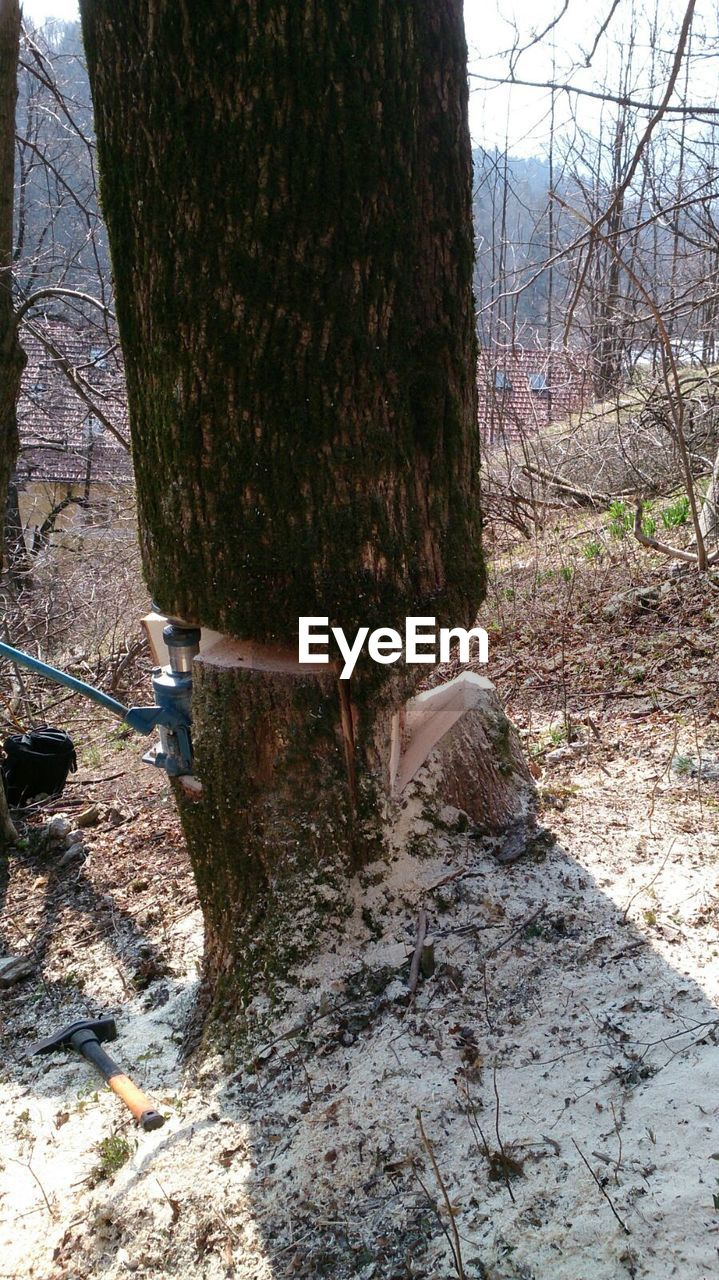 tree trunk, day, tree, nature, animal themes, no people, one animal, outdoors, forest, domestic animals, branch, mammal