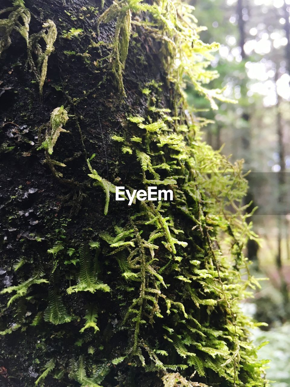 growth, green color, nature, tree, focus on foreground, day, close-up, no people, plant, outdoors, tree trunk, beauty in nature, fragility, freshness