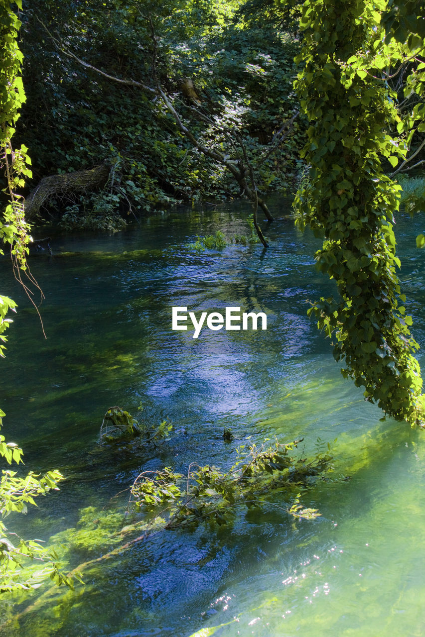 nature, tree, forest, water, beauty in nature, tranquility, growth, river, no people, outdoors, tranquil scene, plant, day, scenics