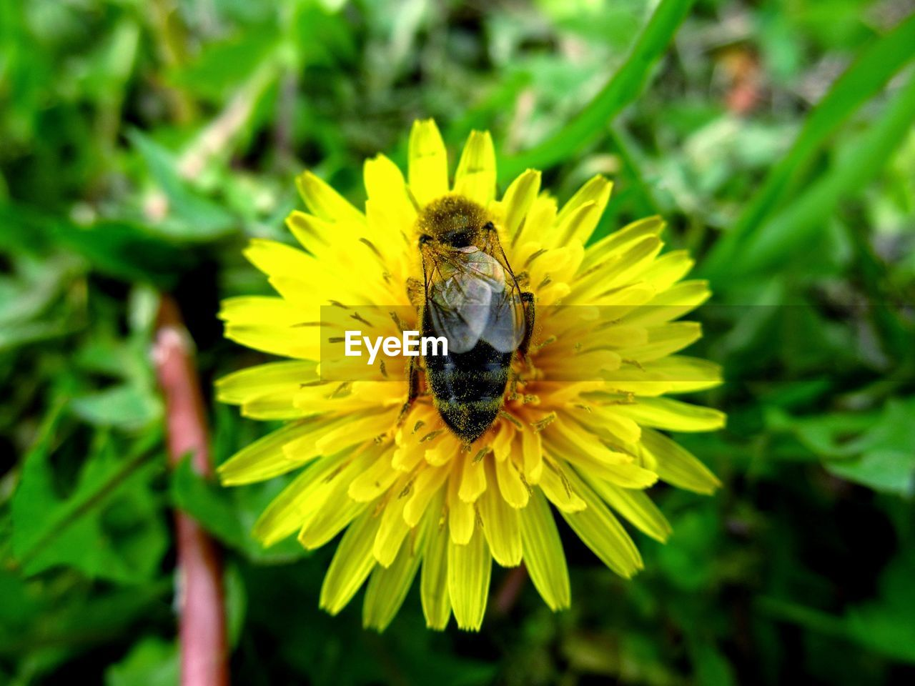 flower, insect, yellow, animal themes, animals in the wild, one animal, nature, petal, growth, beauty in nature, outdoors, fragility, plant, freshness, day, bee, green color, close-up, no people, animal wildlife, flower head, focus on foreground, pollination, leaf