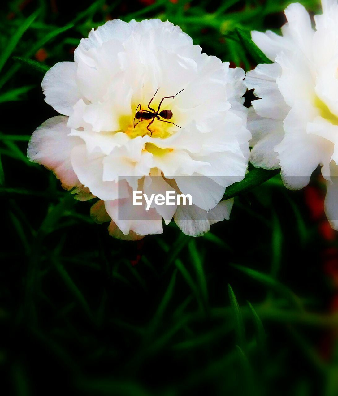 flower, petal, animal themes, one animal, beauty in nature, insect, fragility, growth, nature, flower head, animals in the wild, plant, yellow, no people, close-up, freshness, outdoors, day, blooming