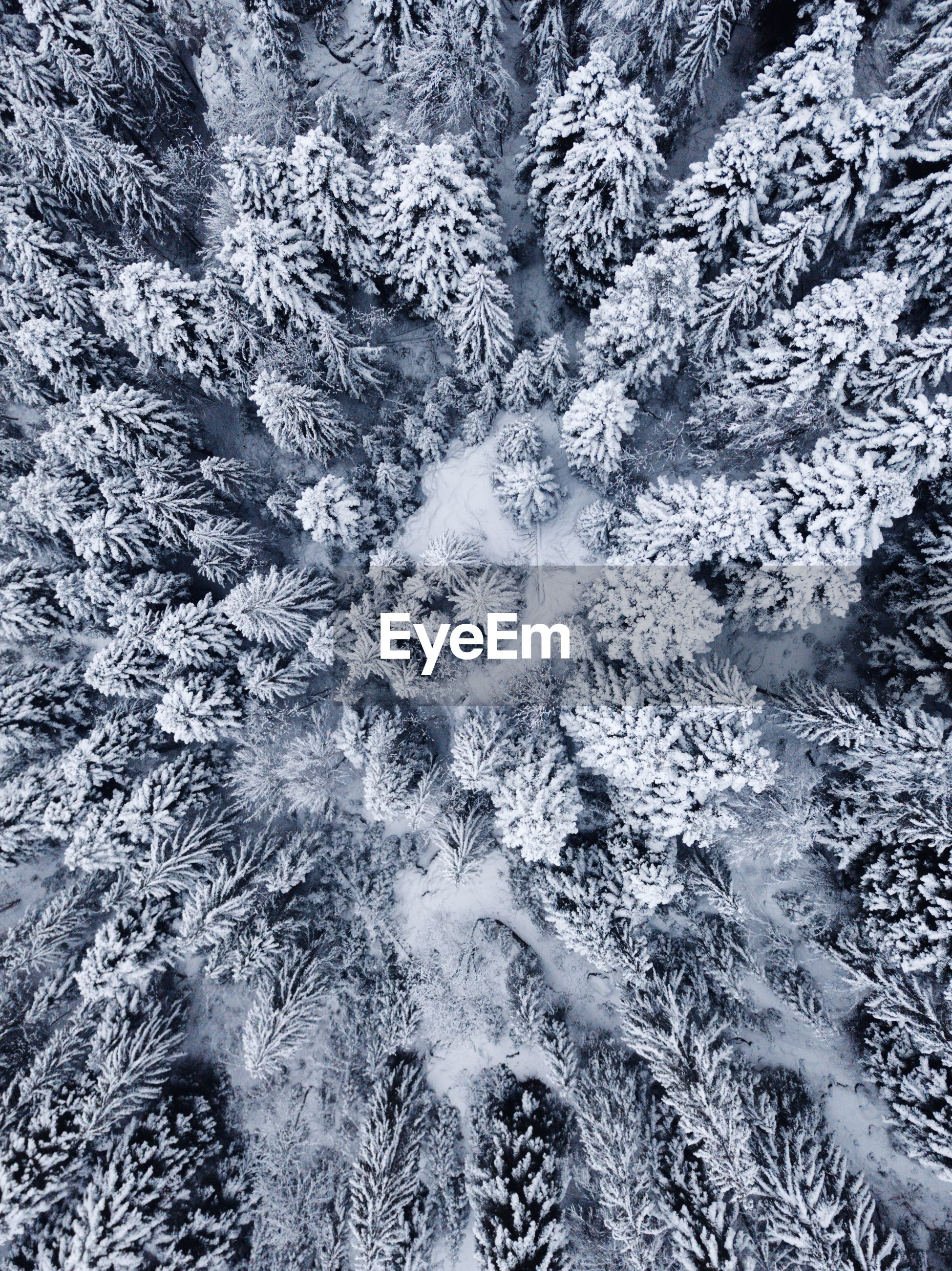 Full frame shot of snow covered trees in forest during winter
