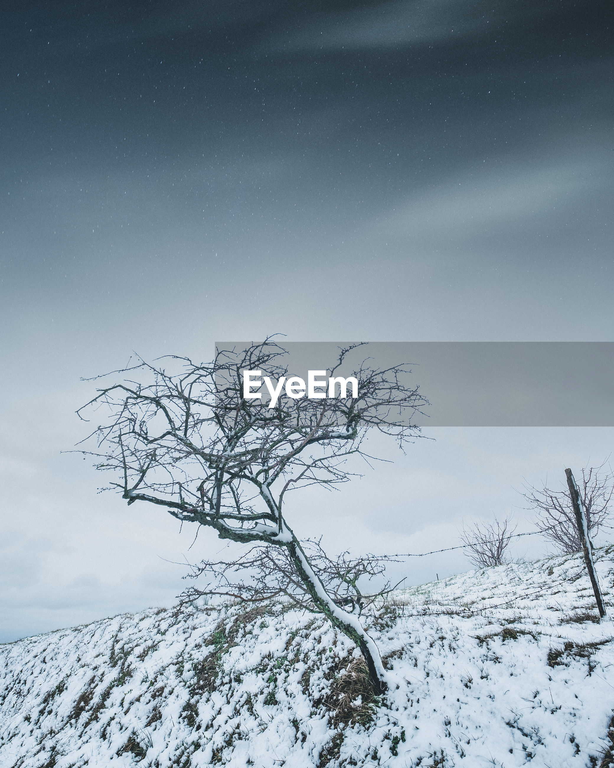 Bare tree on snowy land against sky