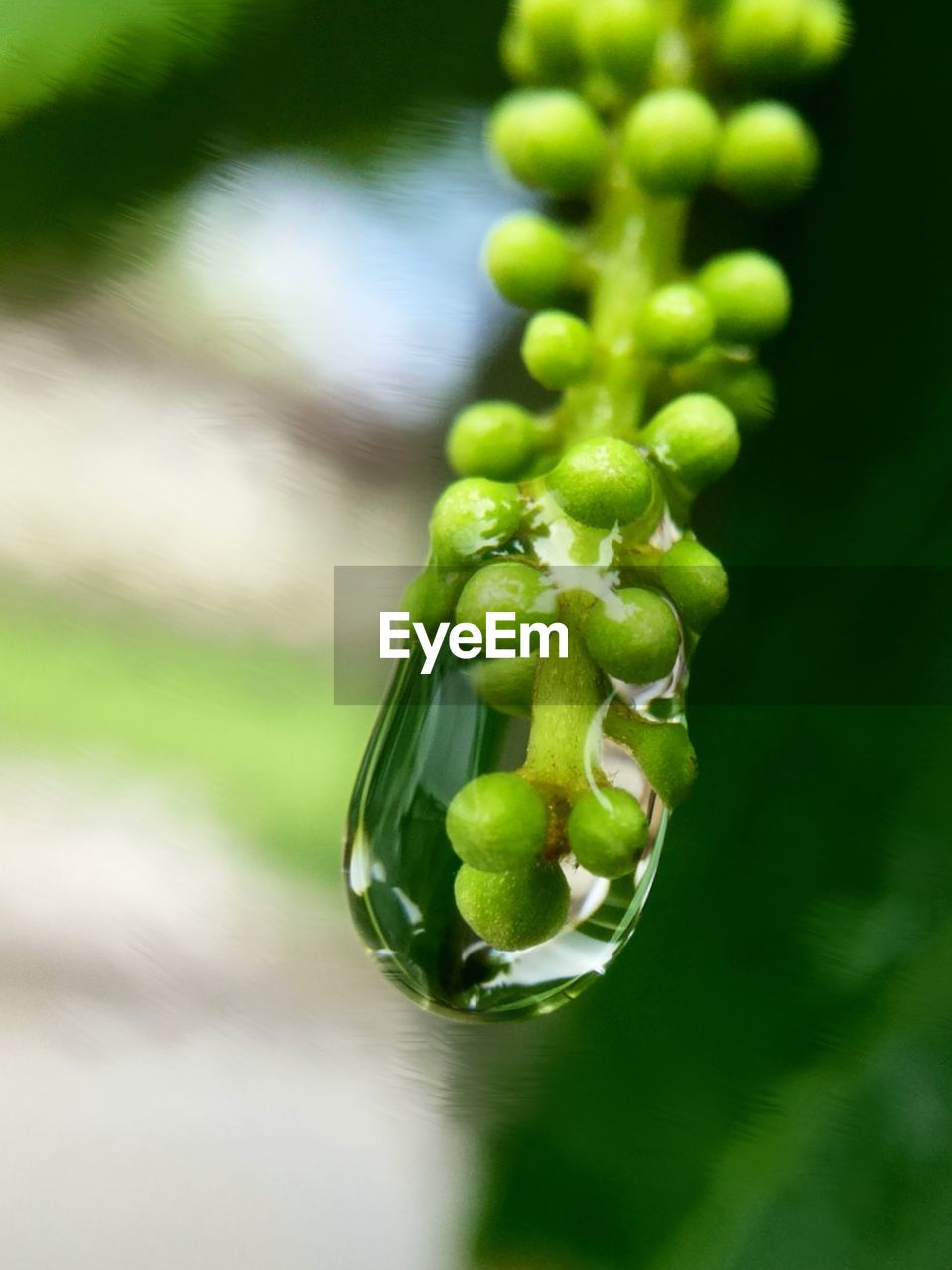 green color, no people, nature, growth, close-up, focus on foreground, outdoors, day, freshness, beauty in nature