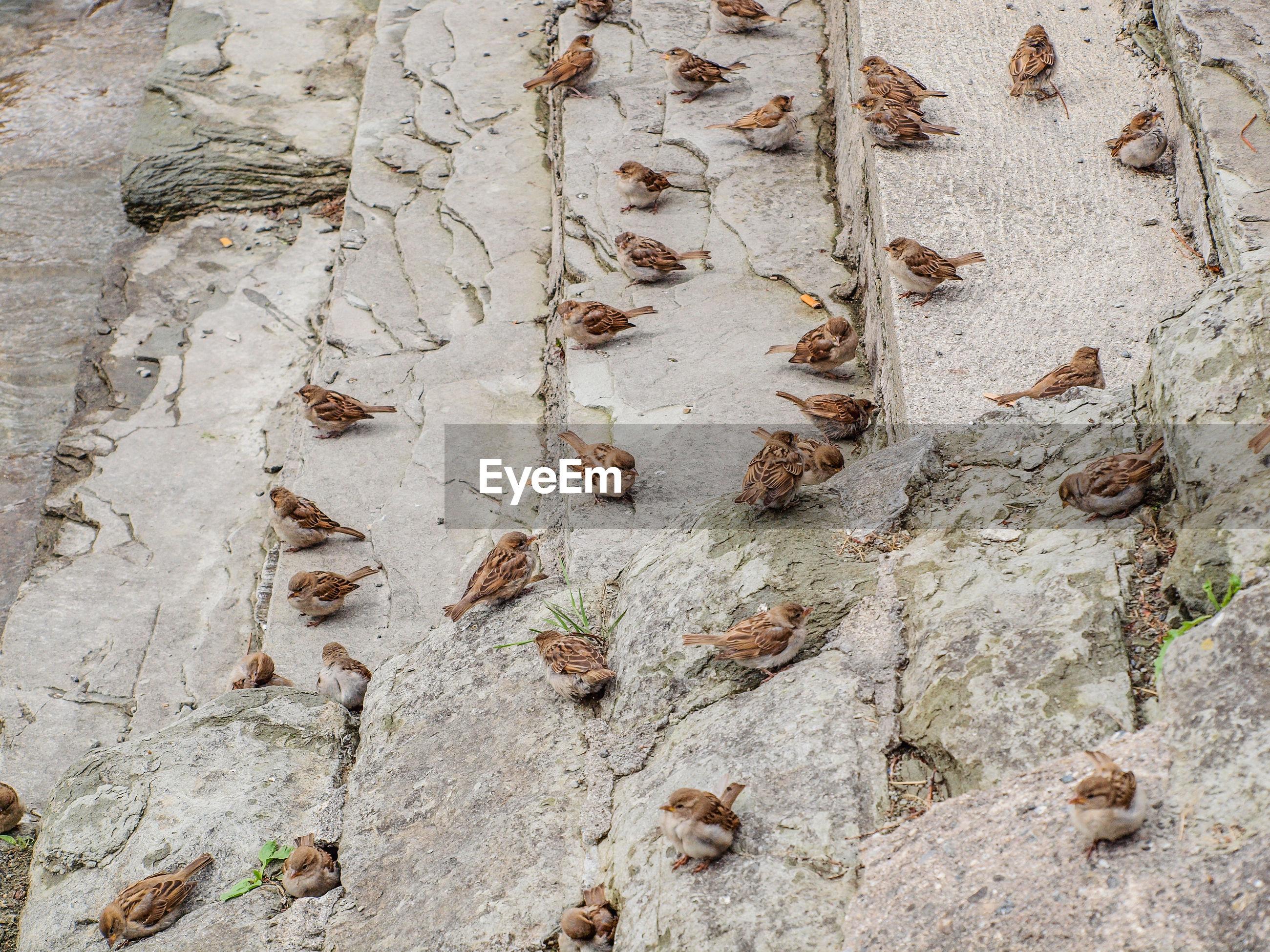 FULL FRAME SHOT OF TREE TRUNK ON WALL
