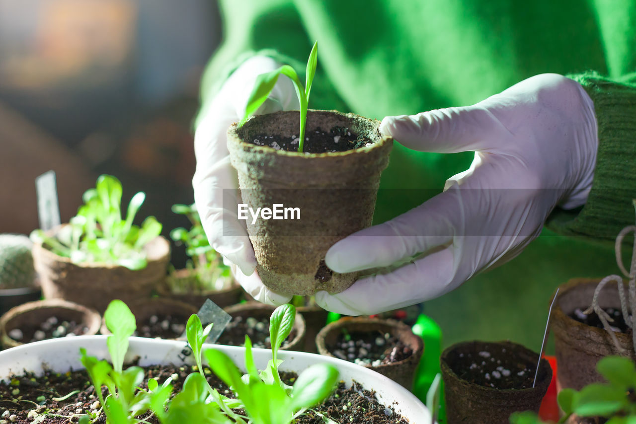 plant, human hand, growth, one person, hand, real people, gardening, green color, holding, leaf, nature, plant part, human body part, potted plant, protective workwear, seedling, beginnings, protective glove, working, planting, flower pot