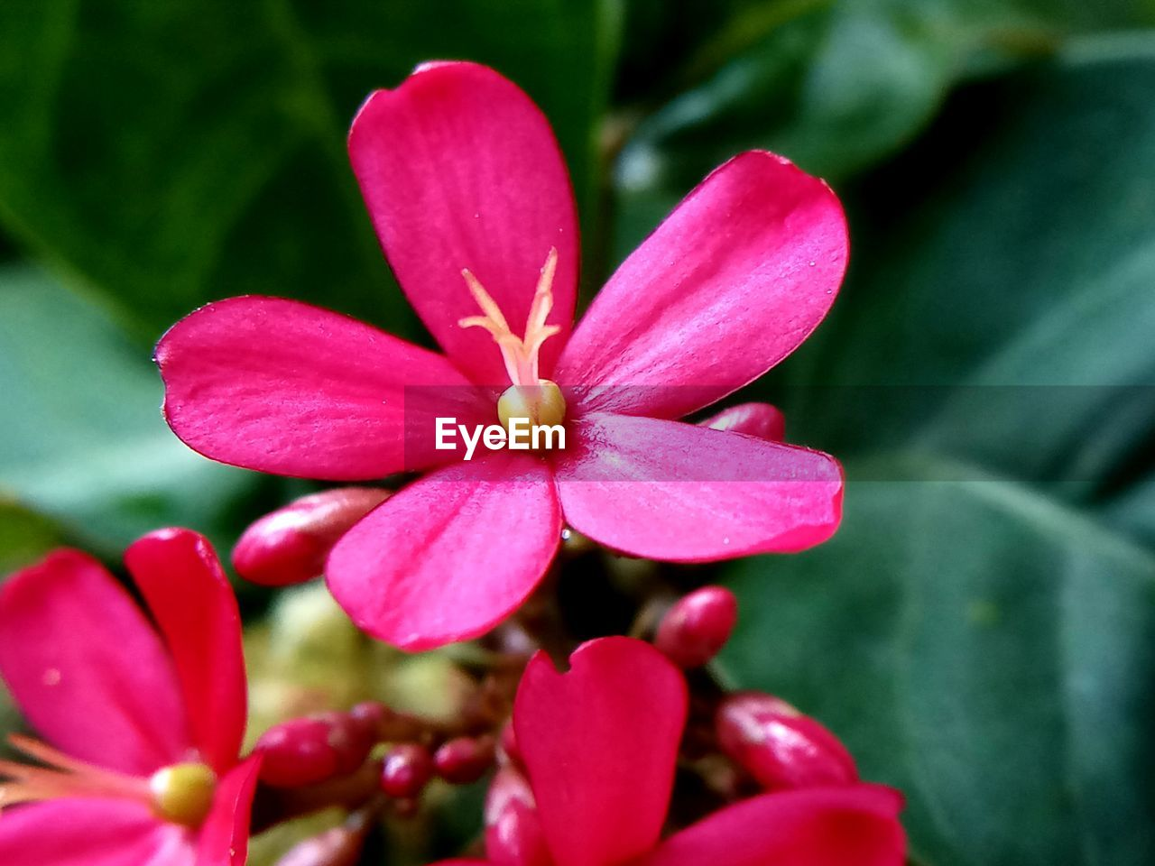 petal, flower, pink color, growth, fragility, beauty in nature, flower head, nature, freshness, blooming, no people, close-up, day, red, plant, outdoors, zinnia