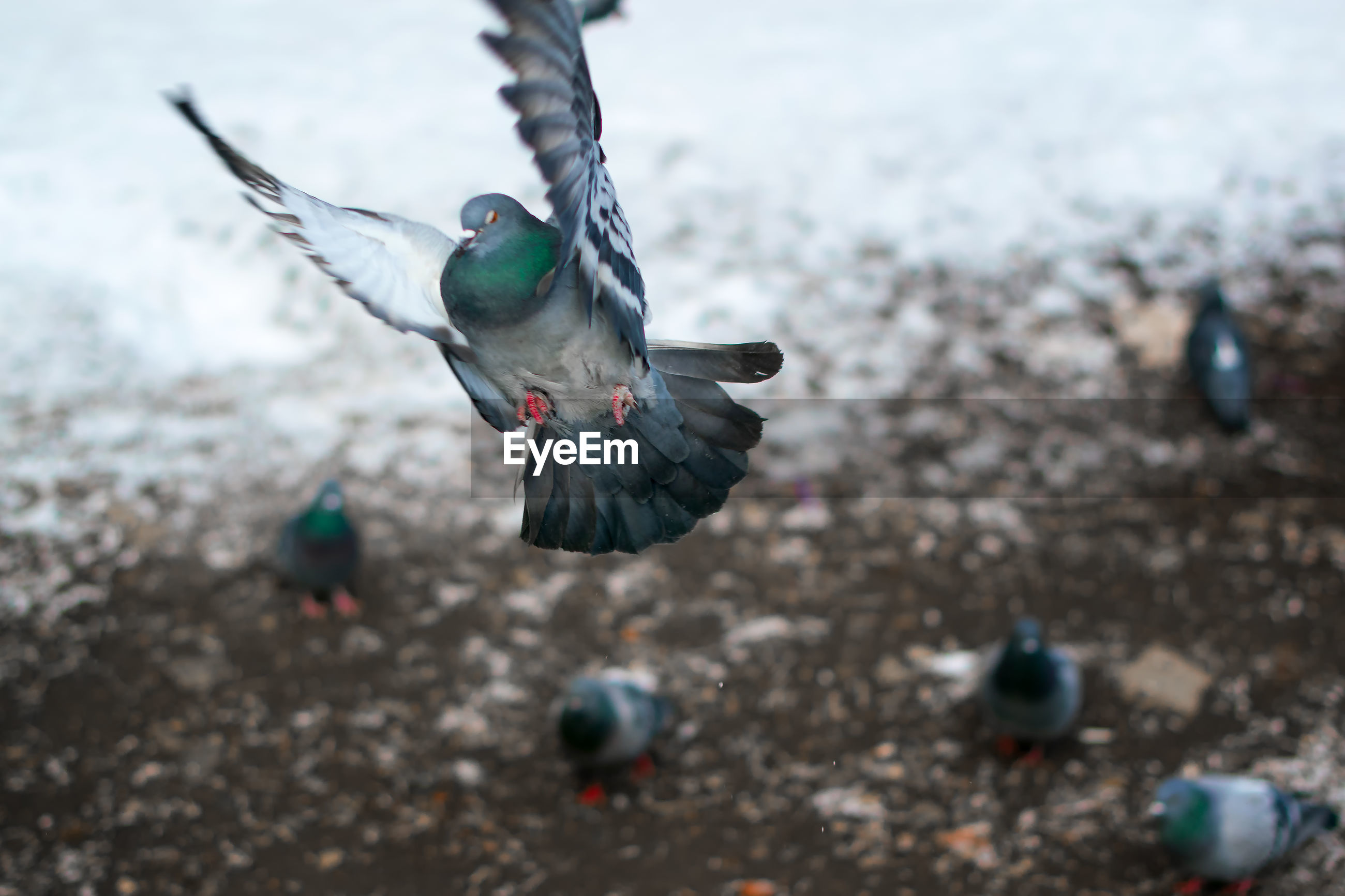 High angle view of birds flying during winter