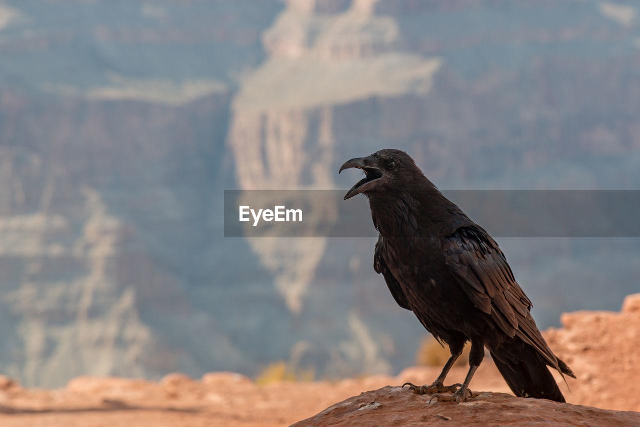 Bird perching on mountain against sky