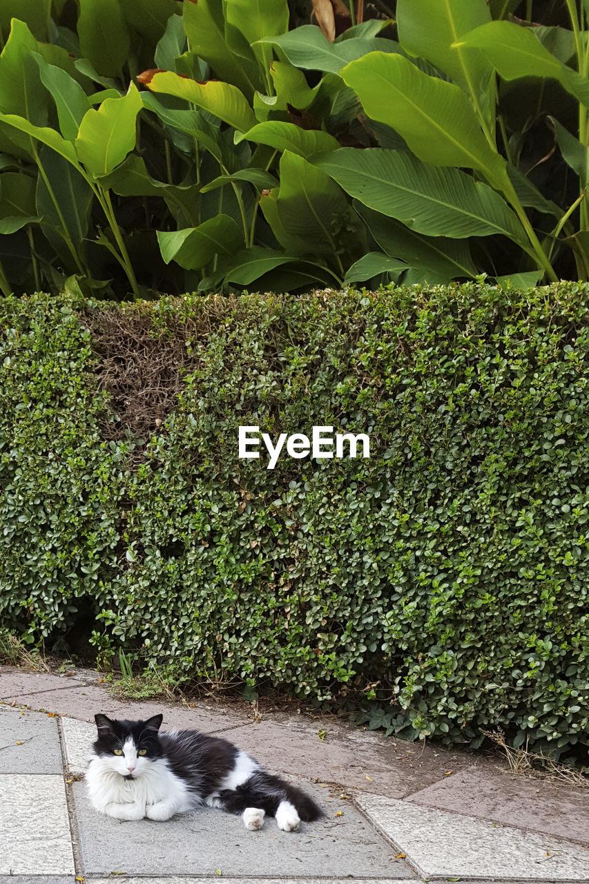 Cat Lying On Plant