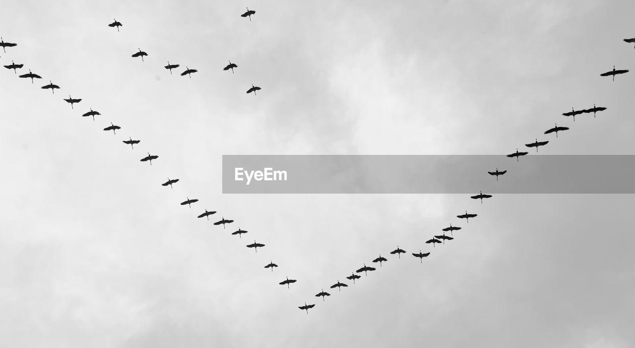 Flock Of Birds Flying Against Sky