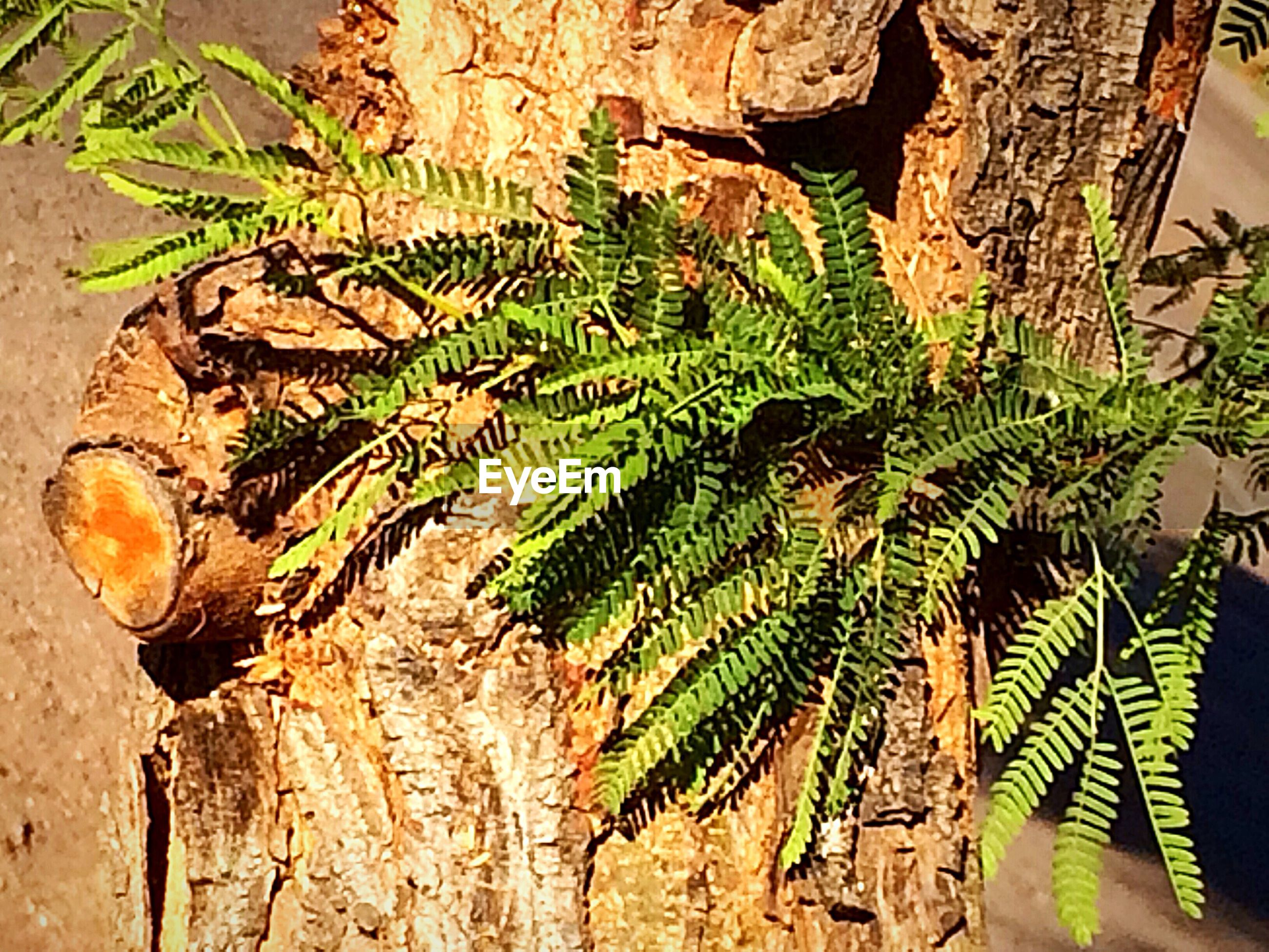 plant, growth, tree, leaf, nature, plant part, no people, green color, close-up, day, tree trunk, trunk, sunlight, outdoors, animal wildlife, animal, animals in the wild, beauty in nature, fern, wood - material