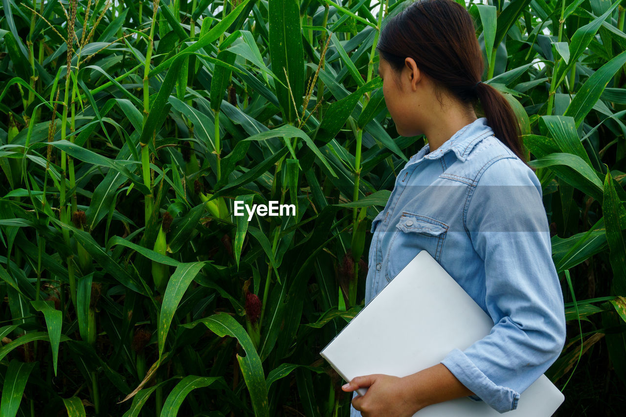 Rear view of woman examining corn crops while holding laptop