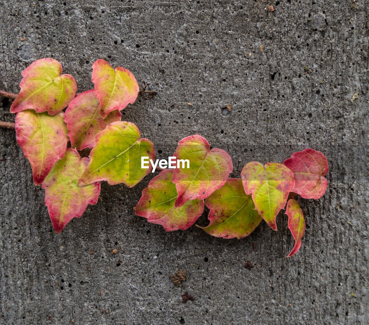 leaf, change, fruit, close-up, autumn, high angle view, outdoors, no people, day, nature, road, red, green color, growth, food, freshness