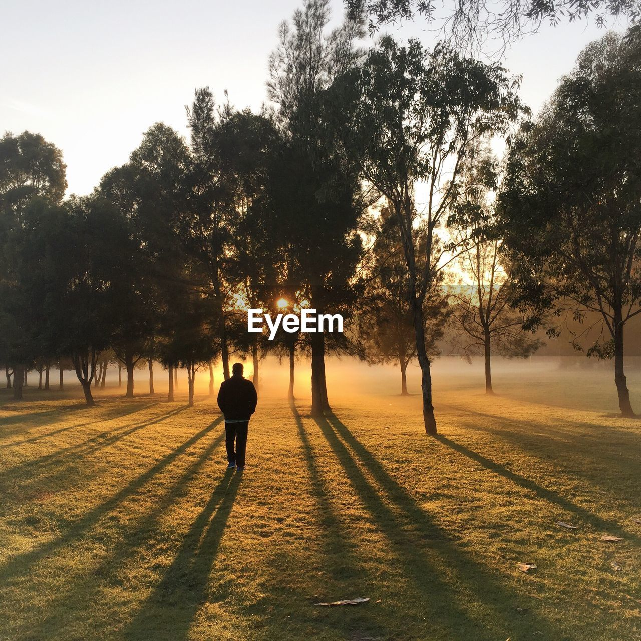 Man Walking On Field Against Trees During Sunrise